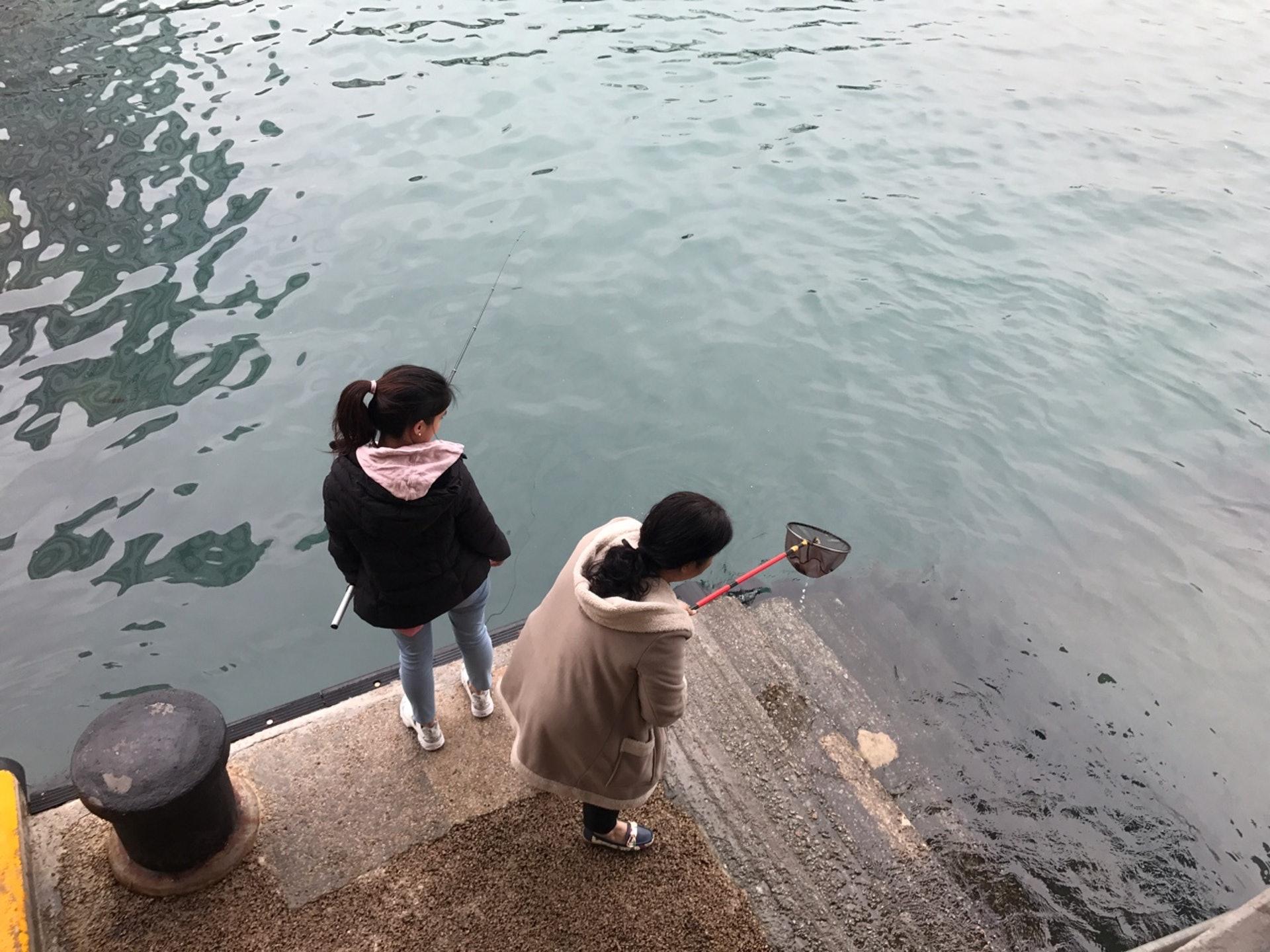 這一邊有人在放生各款海魚,在碼頭的另一邊,則有市民將疑似被放回大海的泥鯭撈起。(梁煥敏攝)
