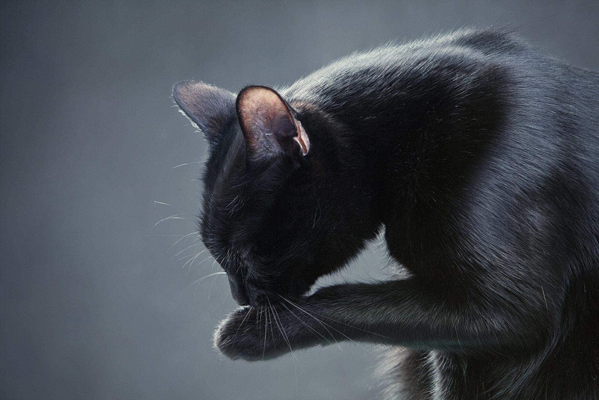 貓貓常常舔同一個地方?可能反映牠該處很痛!(VCG)