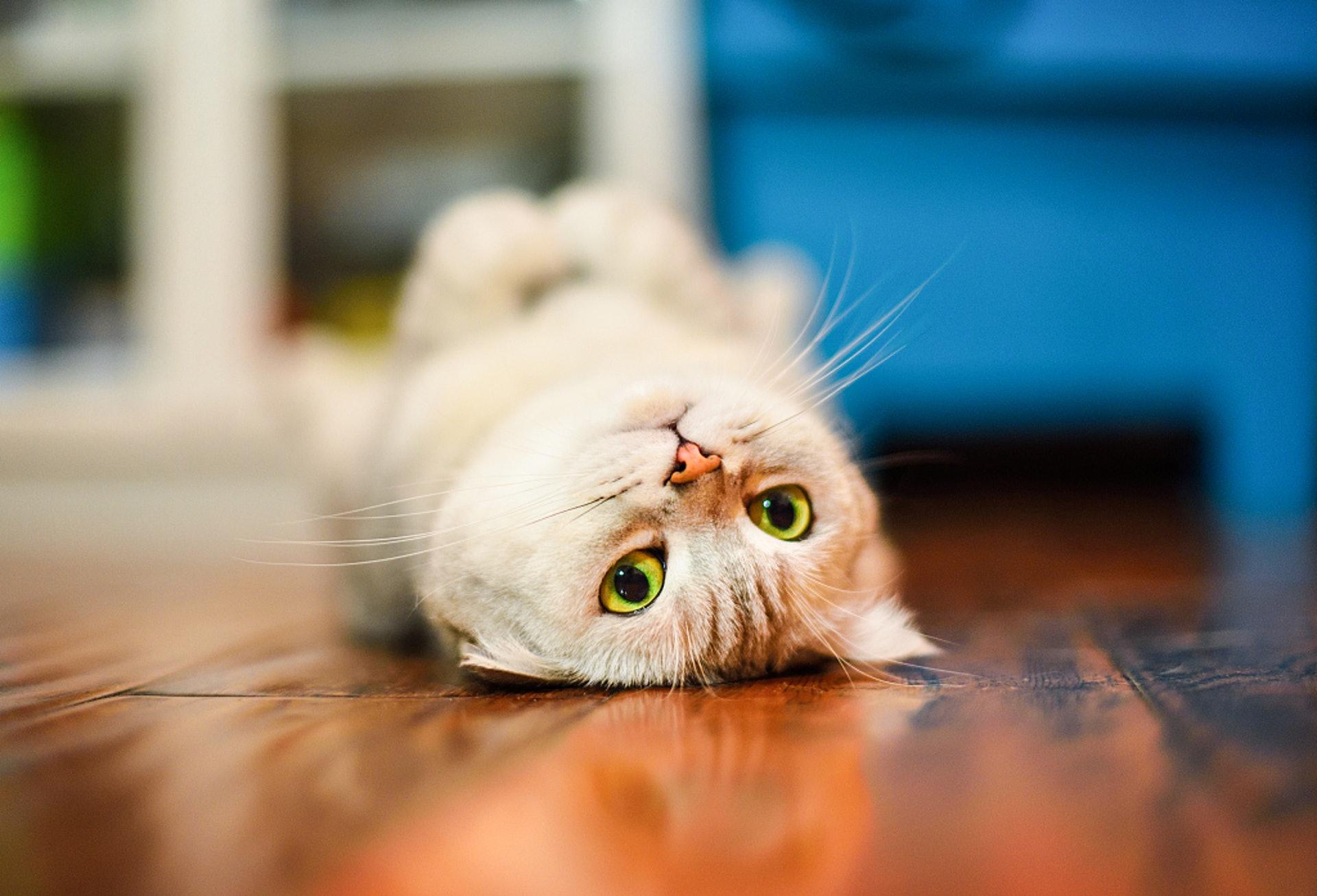 當貓貓感到痛楚,生活習慣和心理均有影響。(VCG)