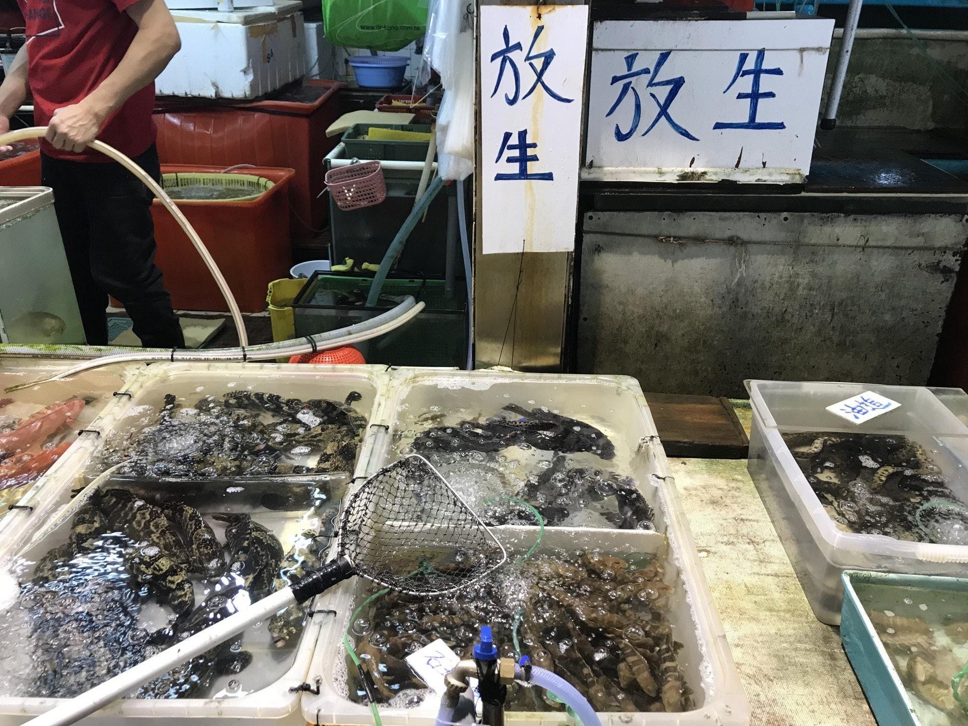 有北角碼頭海鮮檔檔主指沙巴龍躉適合海上放生,一條4至5斤的沙巴龍躉只需300元一條。(資料圖片)