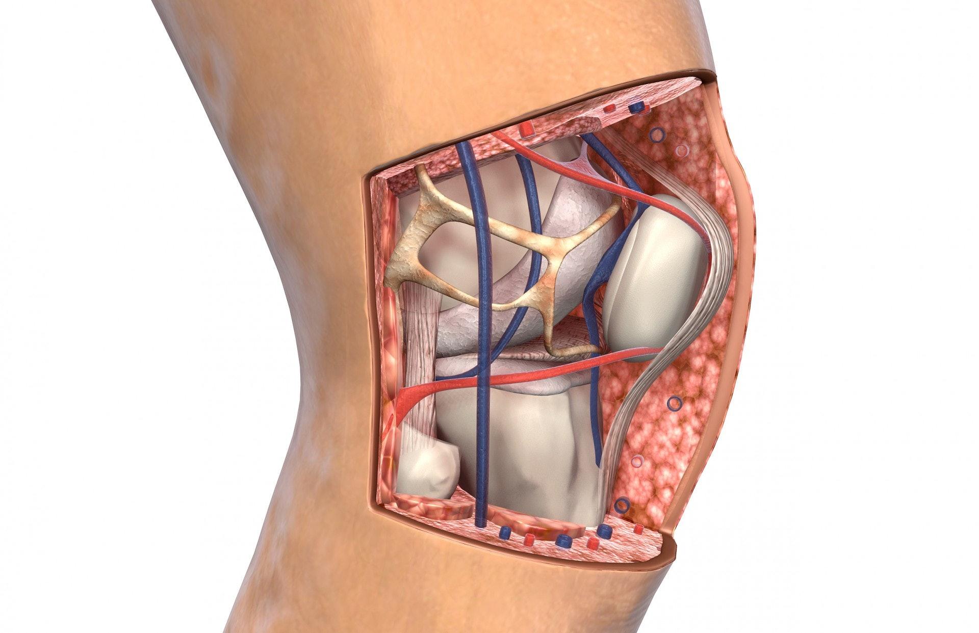 關節名醫呂紹睿指出,膝關節「退化」與年齡的關係並不是直接的,軟骨的破壞是從年輕就開始,發病年齡與膝關節不當使用的強度以及頻率有關。(視覺中國)