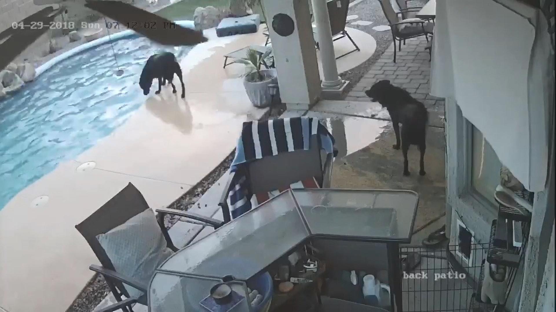 幸好Smokey得到狗朋友Remus的幫助,脫離溺水險境。(影片截圖)