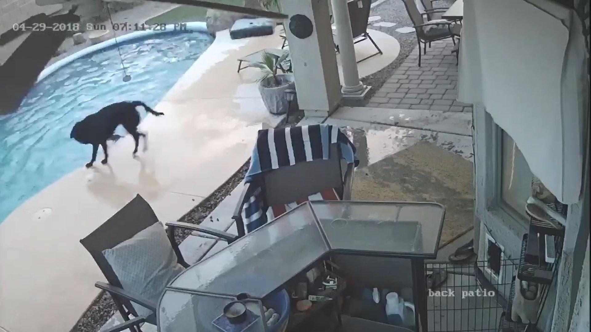 Remus準備跳下水救起Smokey。(影片截圖)