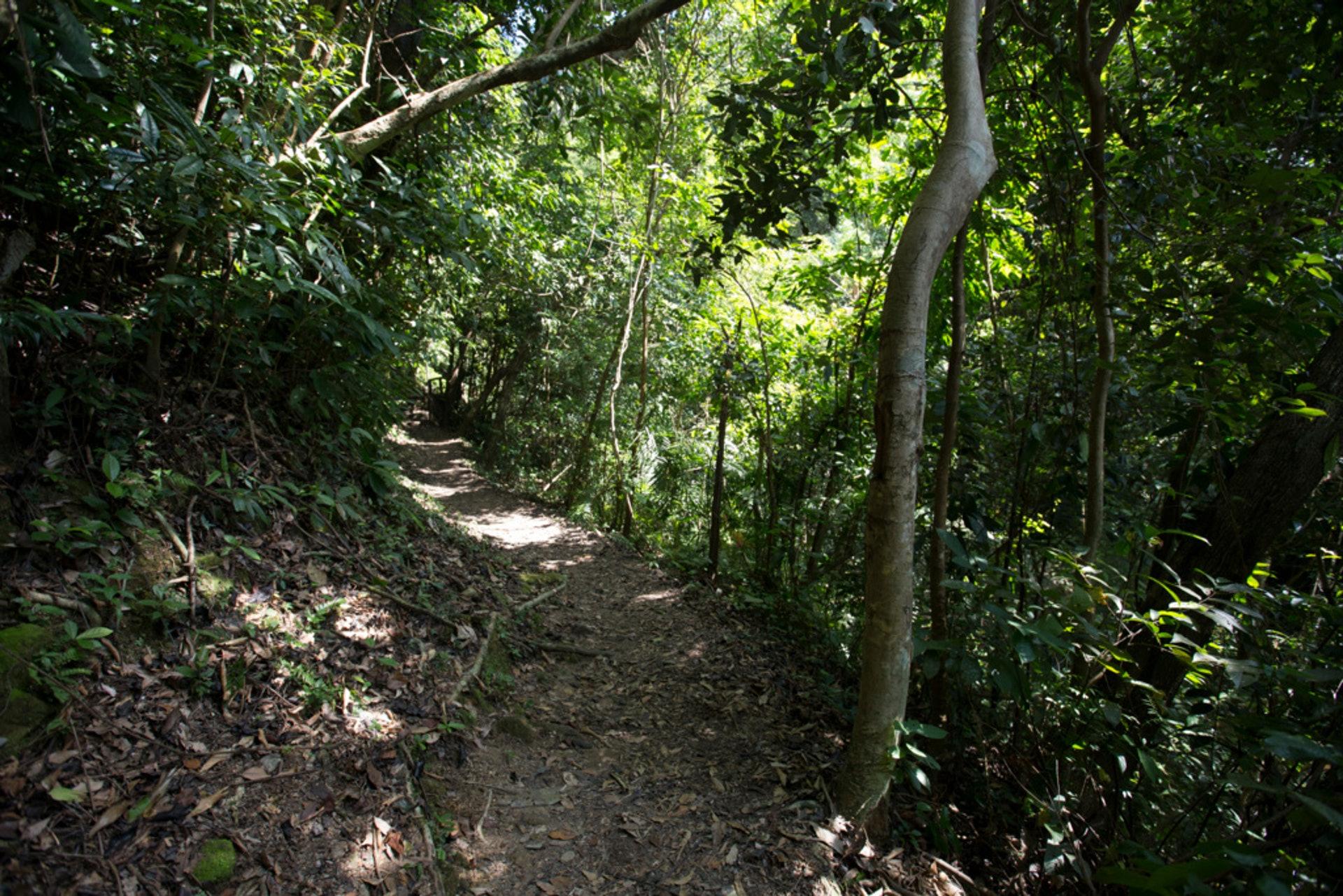 土沉香的生長環境需要年均溫度20℃以上,因此多數生長在東南亞一帶。(吳鍾坤攝)