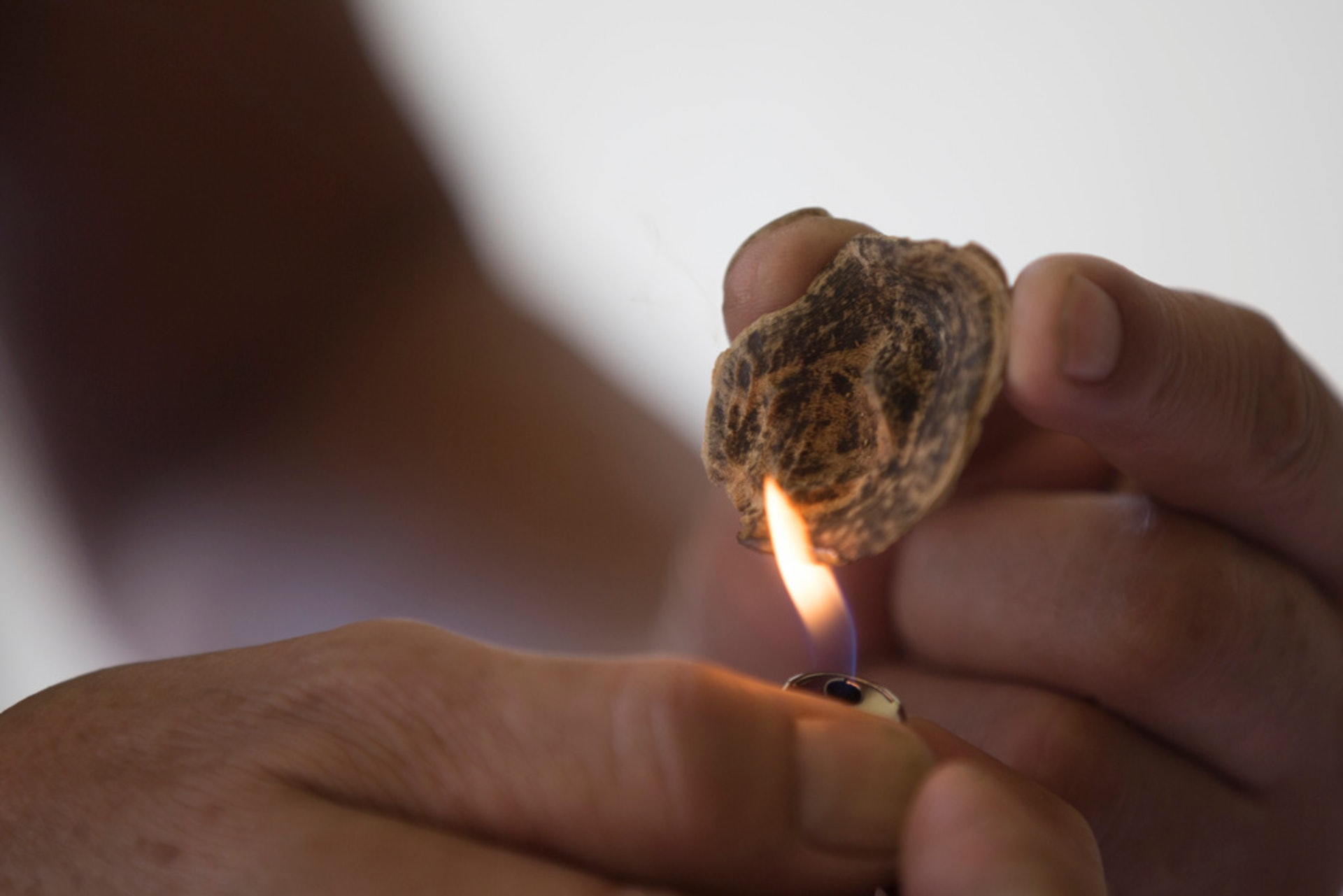 沉香香脂多數被用來製作香料,而沉香片每千克更可達58,000港幣。(羅君豪攝)