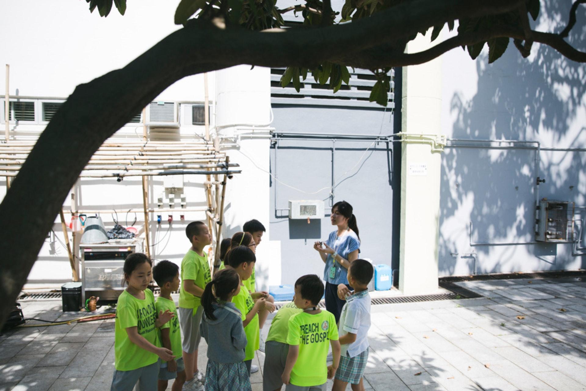 由12名小一至小三的學生組成的E27,由老師王嘉蓉的帶領下,開展「沉香,尋香」的保育計劃。(黃寶瑩攝)