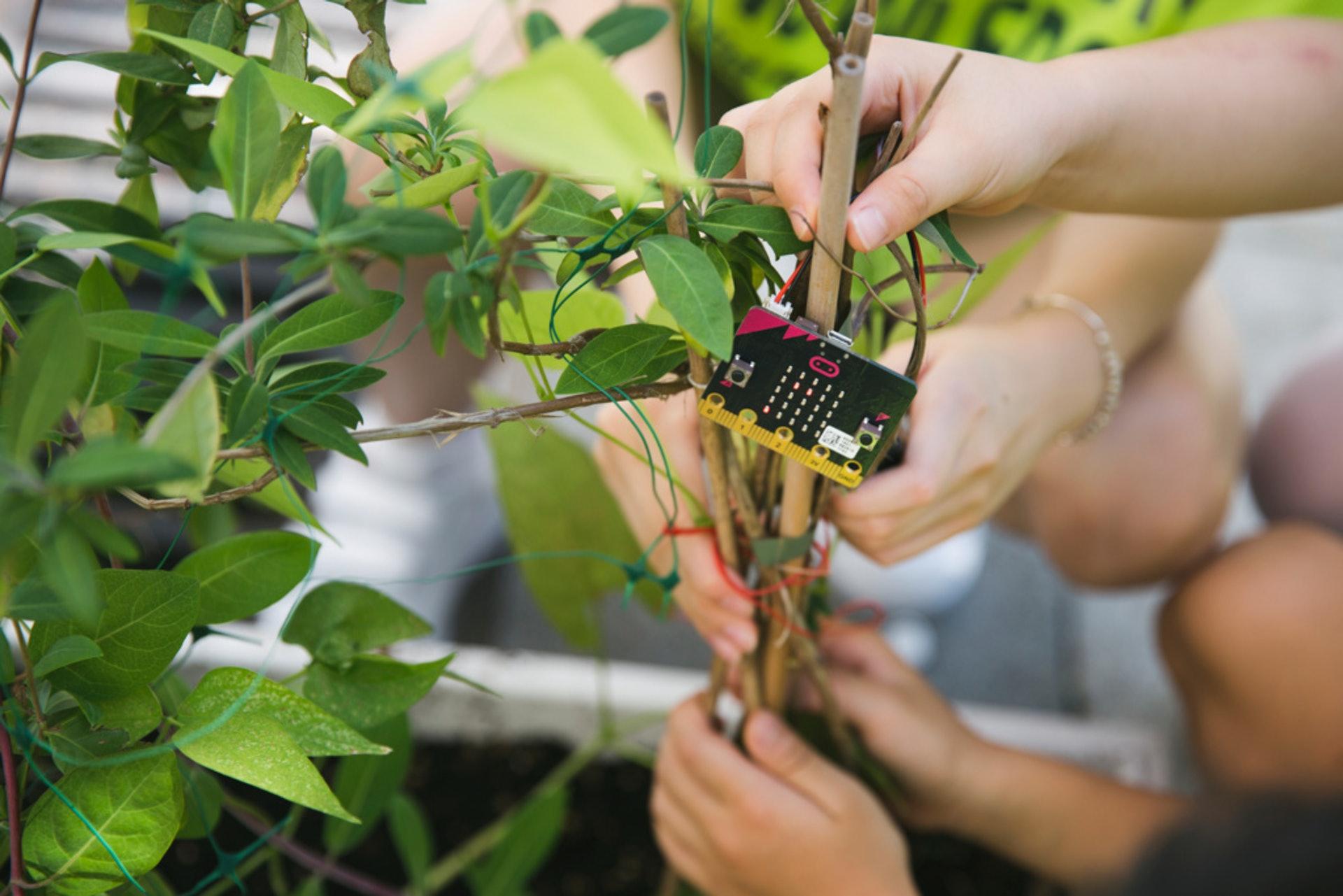 無論怎樣拍打大樹,裝置仍然無法感知,這次他們將裝置放到灌木上再試。(黃寶瑩攝)