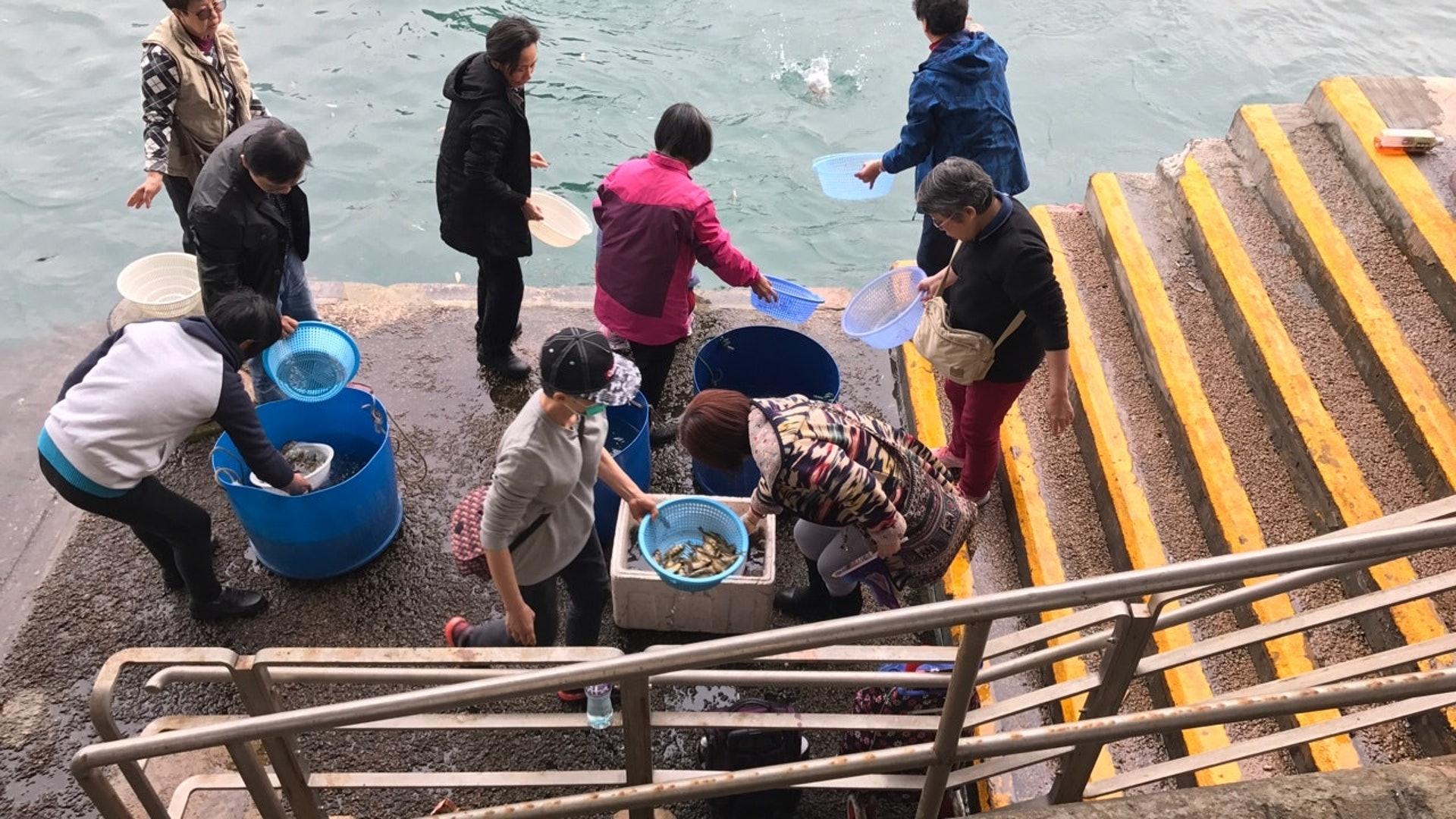 不時有巿民在海邊做放生活動,但許多生物被放生後仍難逃劫數。(資料圖片)