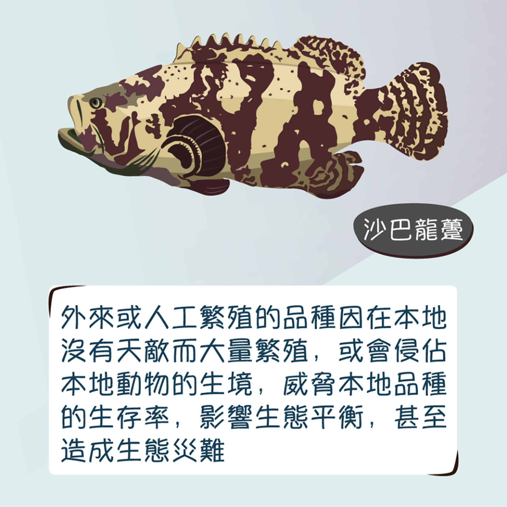 被放生的動物會因未能適應環境、疾病而死亡。(漁農自然護理署圖片)