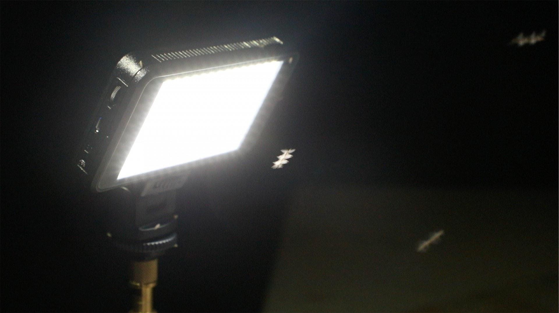 家中唯一光源吸引到不少飛蟲往燈飛。(岑卓熹攝)