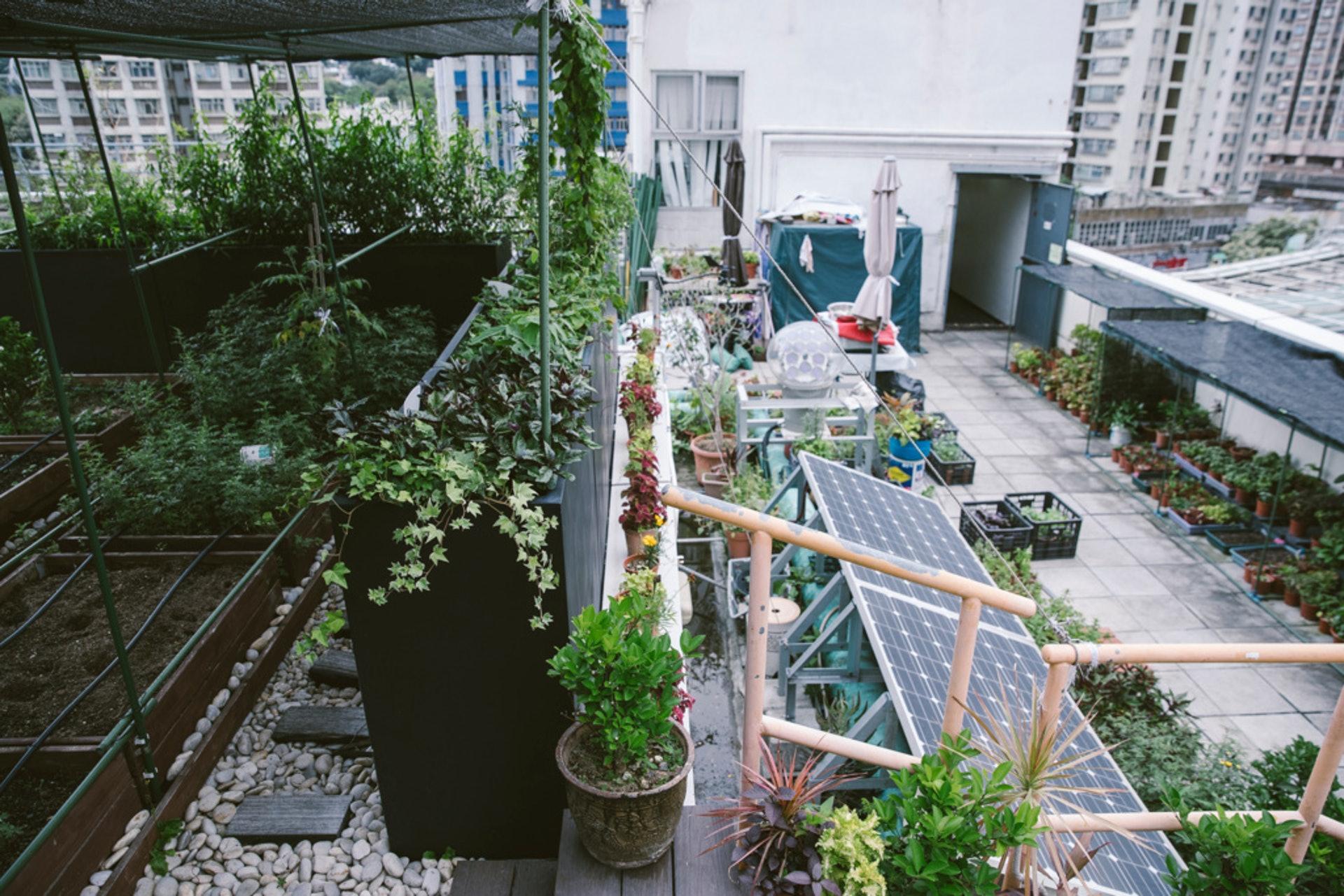 日式天台花園,簡約幽雅,出自花王的心思。(鄭子峰攝)