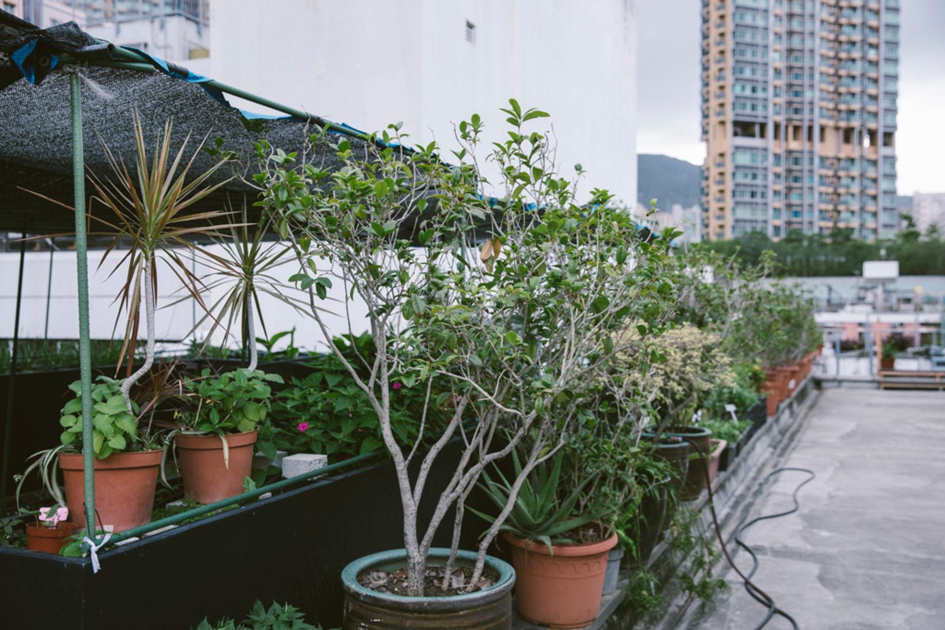 植物品種豐富,都是花王的選擇。(鄭子峰攝)