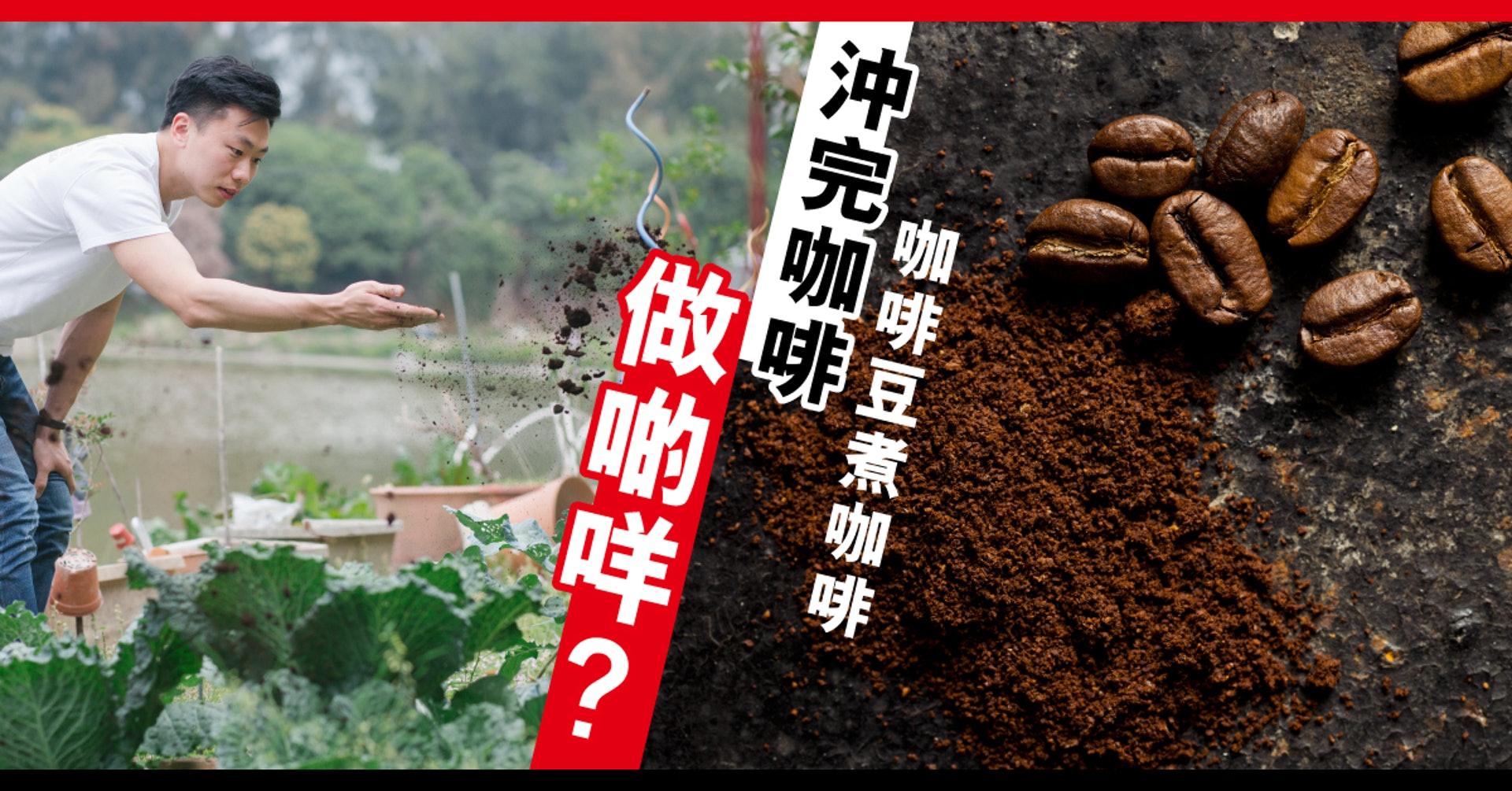 綠行俠發起全城咖啡渣回收計劃,將咖啡渣發酵成肥料免費送贈本地有機農場。