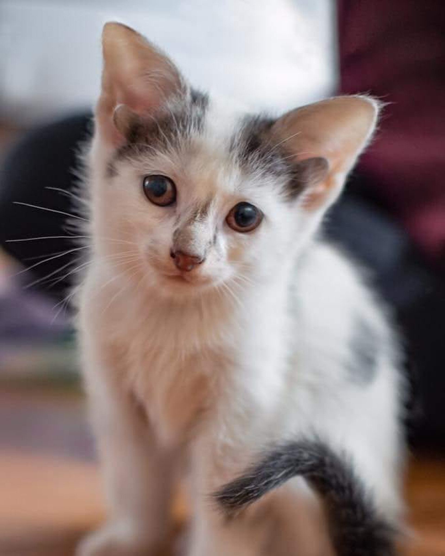 Frankie的兄弟比它幸运得多;虽然同样有4只耳朵,但双眼健康。(Instagram@frank_n_kitten)