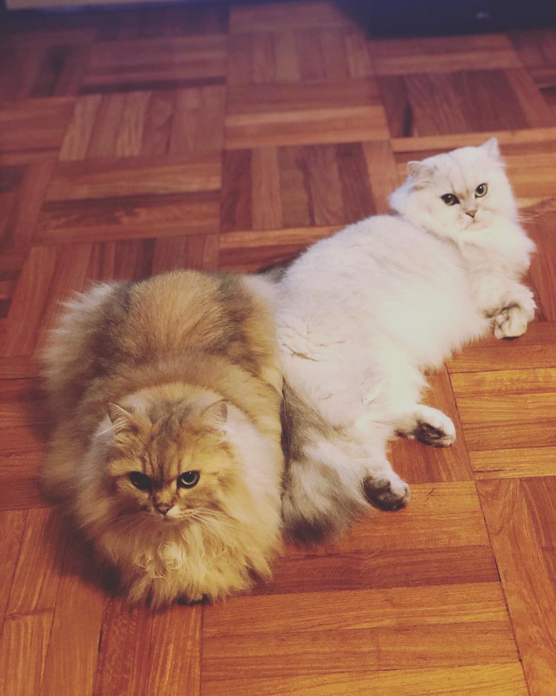 兩隻都咁Cute(IG圖片)
