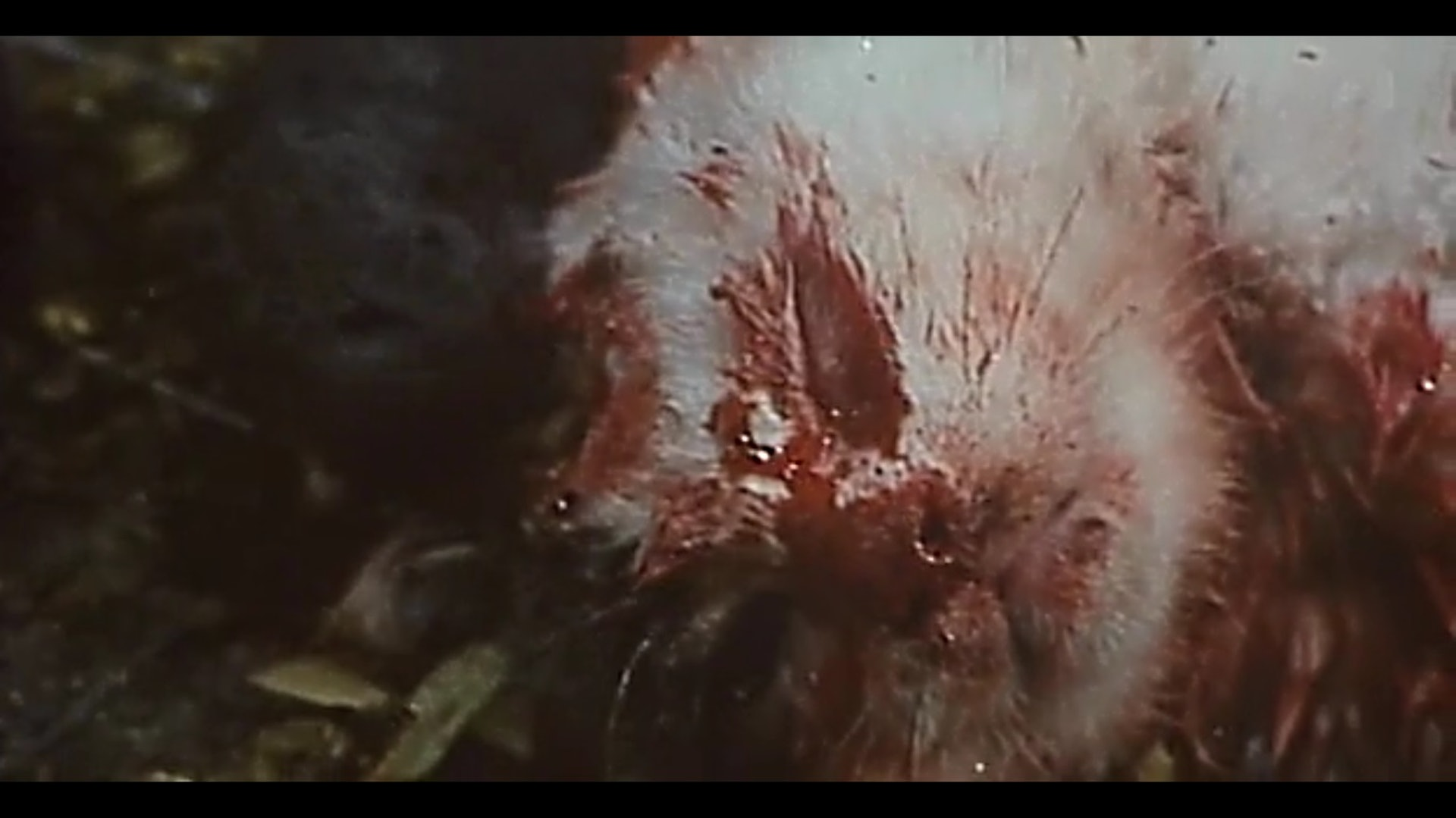 導演在白貓屍灑上染紅的蜜糖,製造白貓被老鼠咬死的錯覺。(影片截圖)