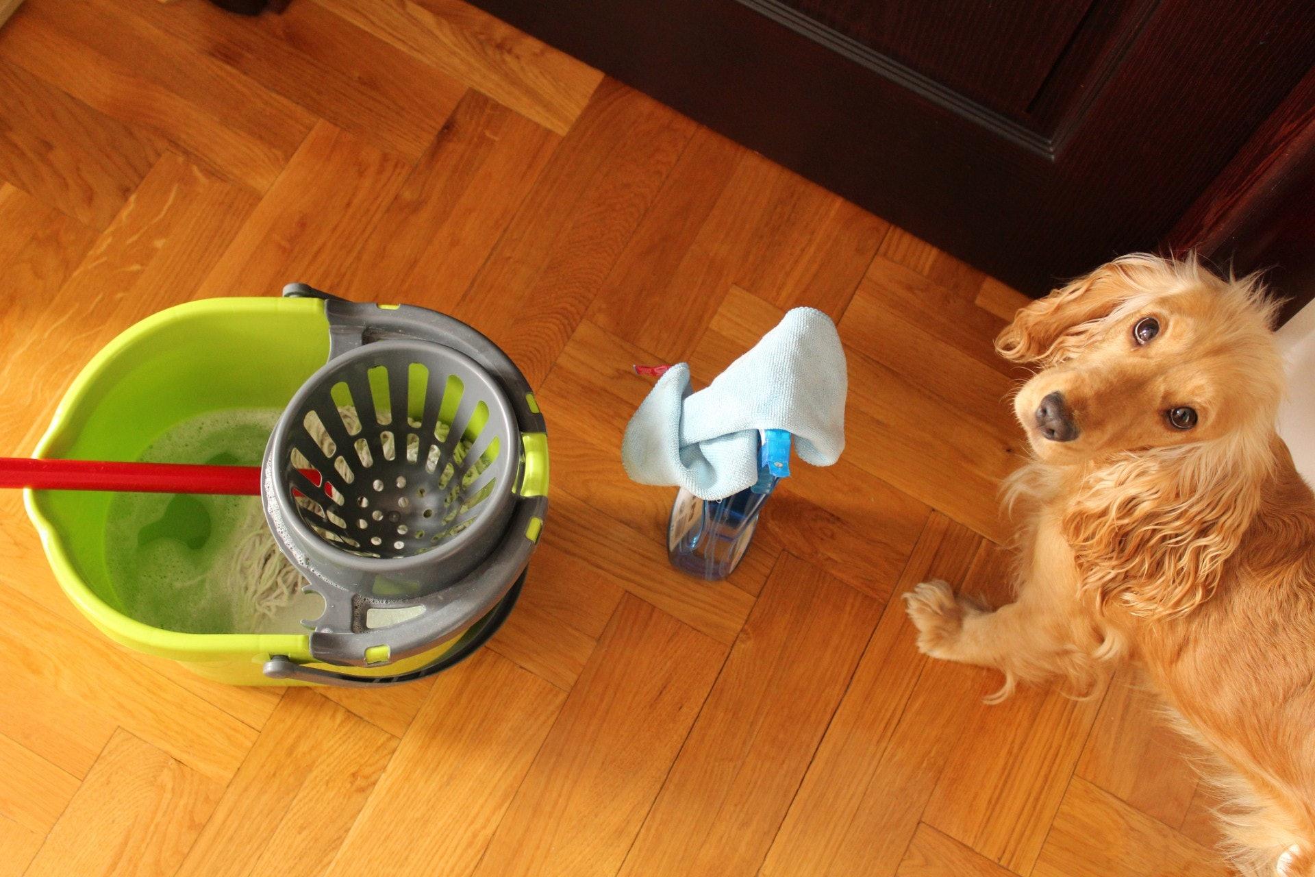 毛孩好奇心重,清潔時最好將毛孩關起來。(Getty Image)