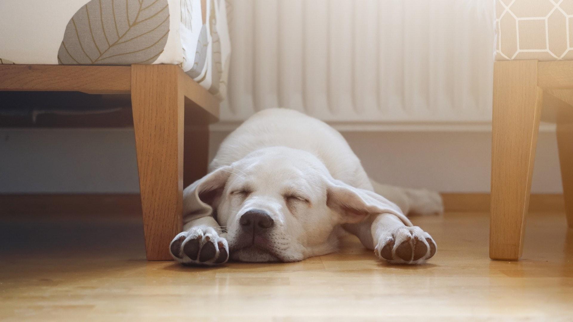 毛孩貼近地板生活,因此地面的有毒物質,牠們最易接觸到。(Getty Image)