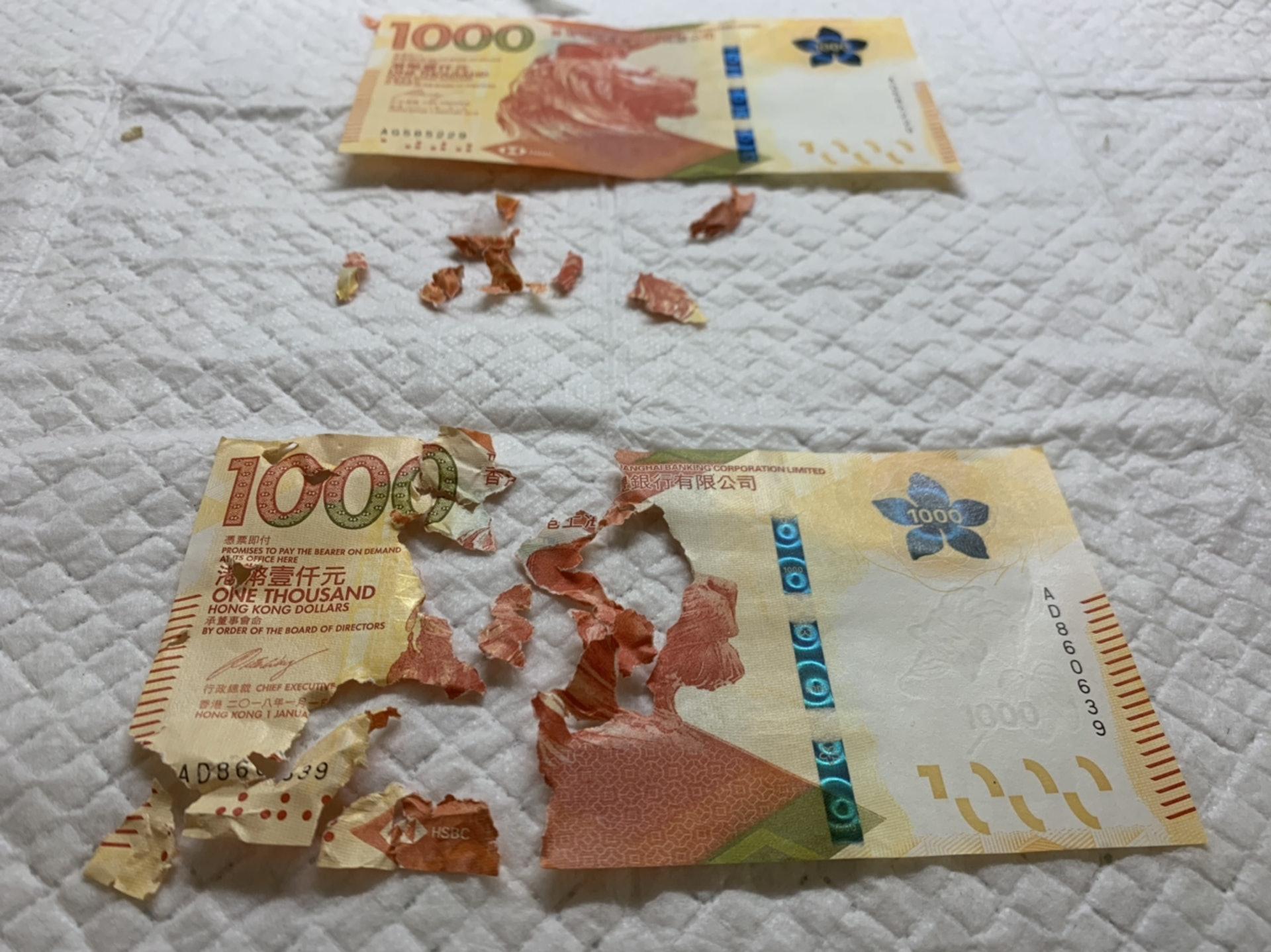 有網民分享一封千元利市被鸚鵡咬爛,十分憤怒,後來以「砌圖」的方式還原鈔票。(連登討論區)