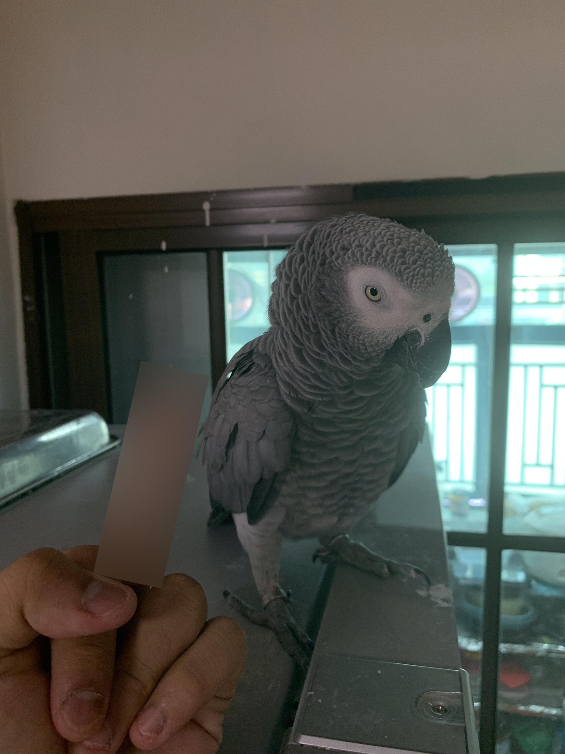 由於十分憤怒,樓主對鸚鵡做出粗口手勢,斥其「死廢雀」。(連登討論區圖片)
