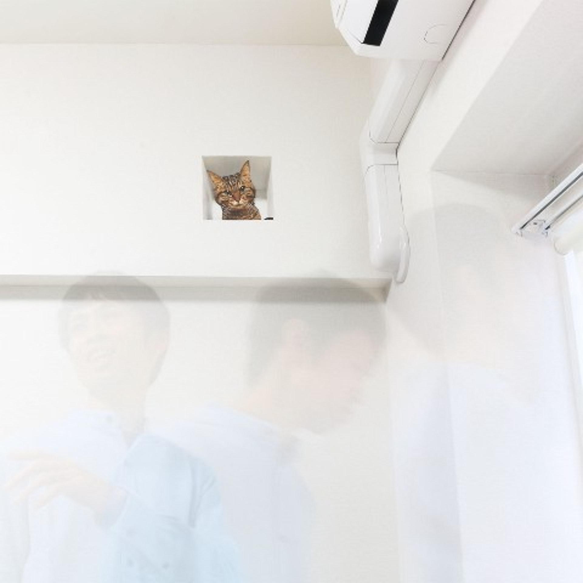 Delusion Mapping貓暗中觀察牆上貼紙:方建議黏貼位置高過頭,最好接近天花,由低望向高的透視效果先強。