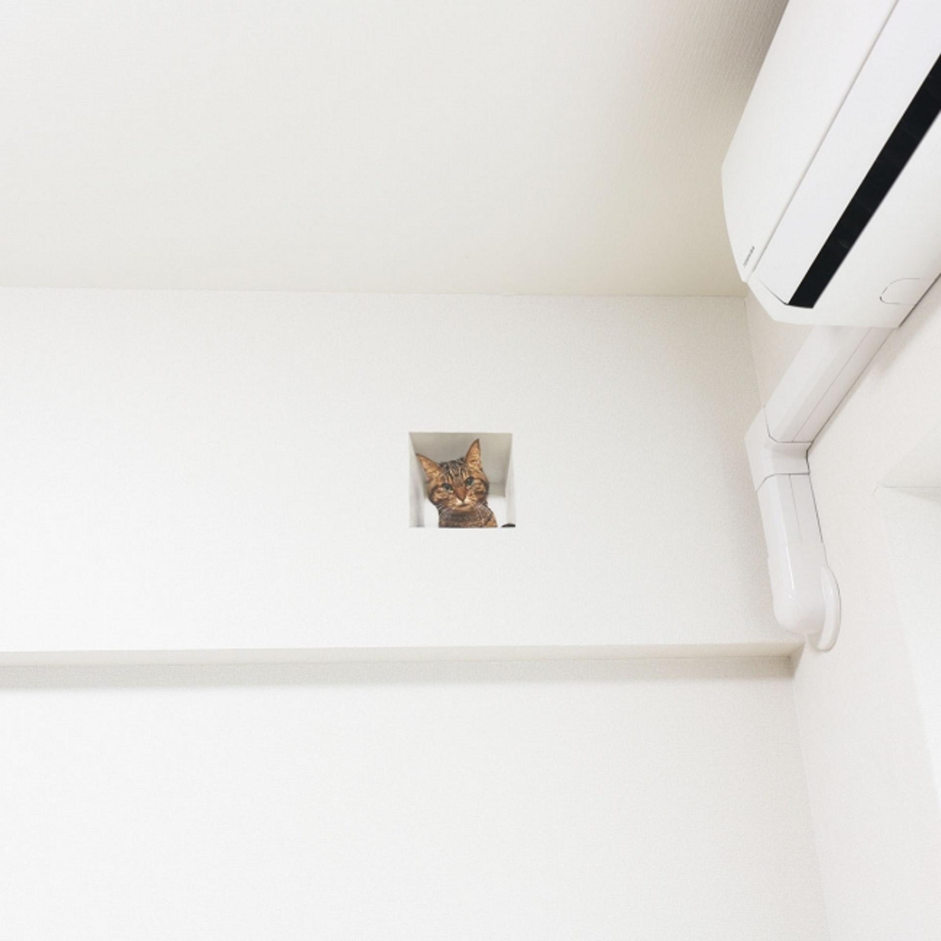 Delusion Mapping貓暗中觀察牆上貼紙:放在近天花位置的牆高,便好似樣。