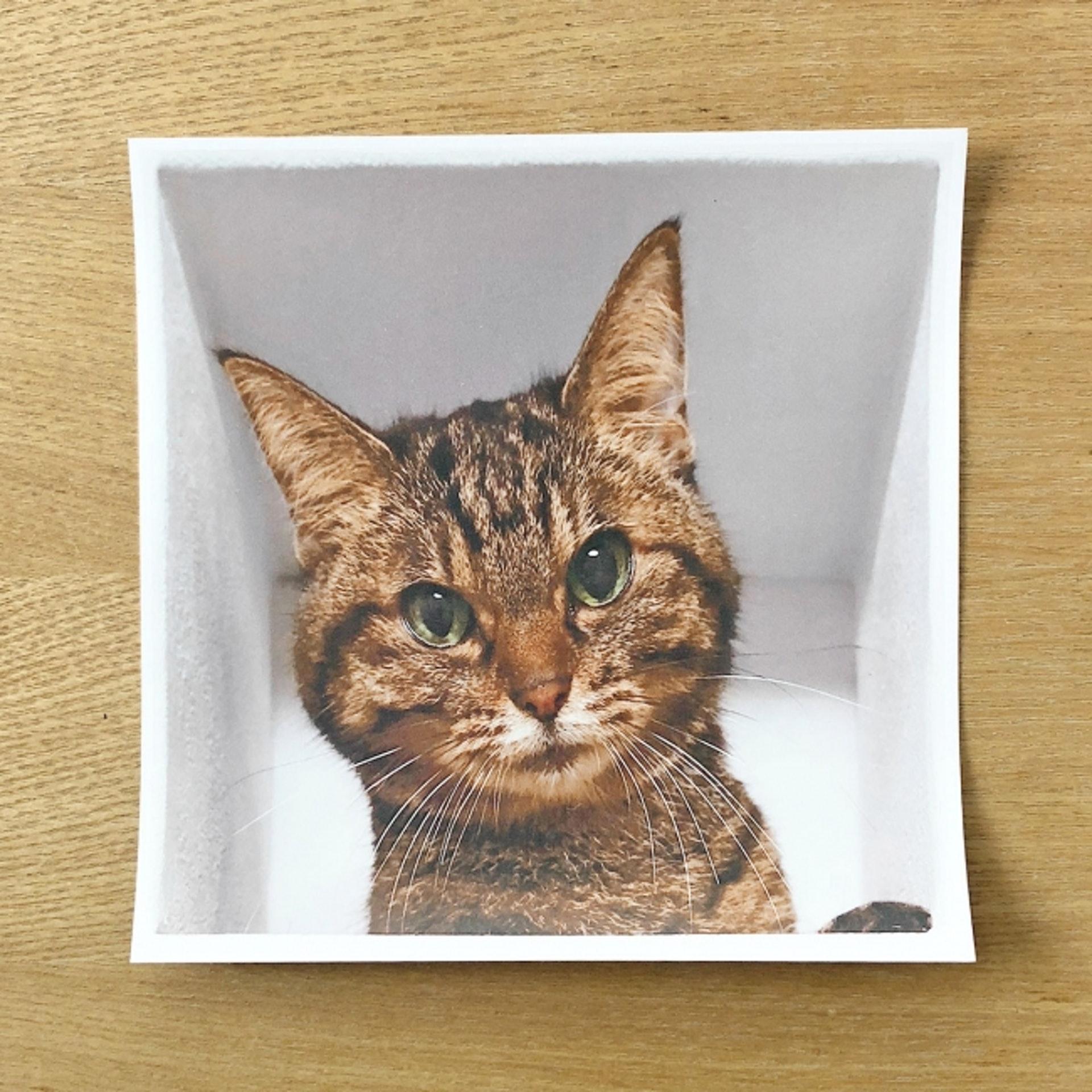Delusion Mapping貓暗中觀察牆上貼紙:約18cm x 18cm大。