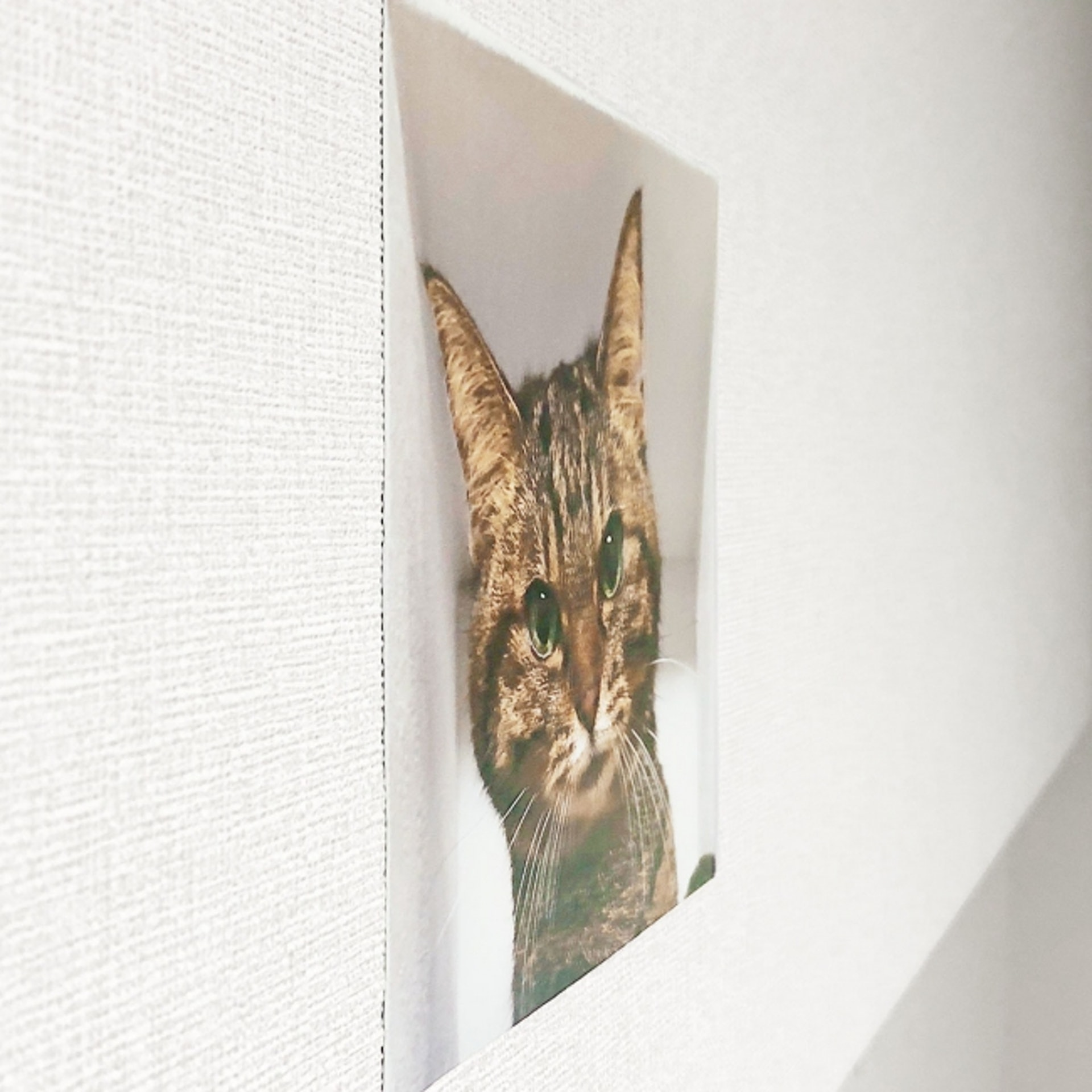 Delusion Mapping貓暗中觀察牆上貼紙:要企到好側先知係假像。
