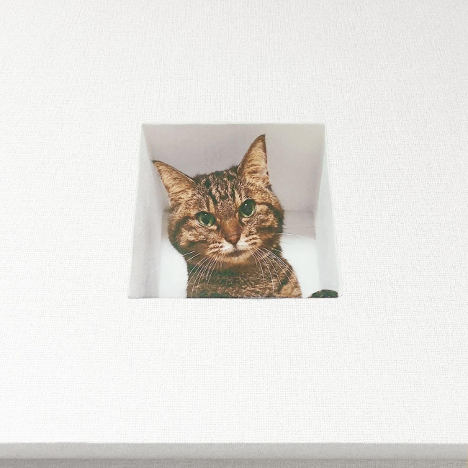 Delusion Mapping貓暗中觀察牆上貼紙:貓貓穿牆窺伺你,真是好像真。