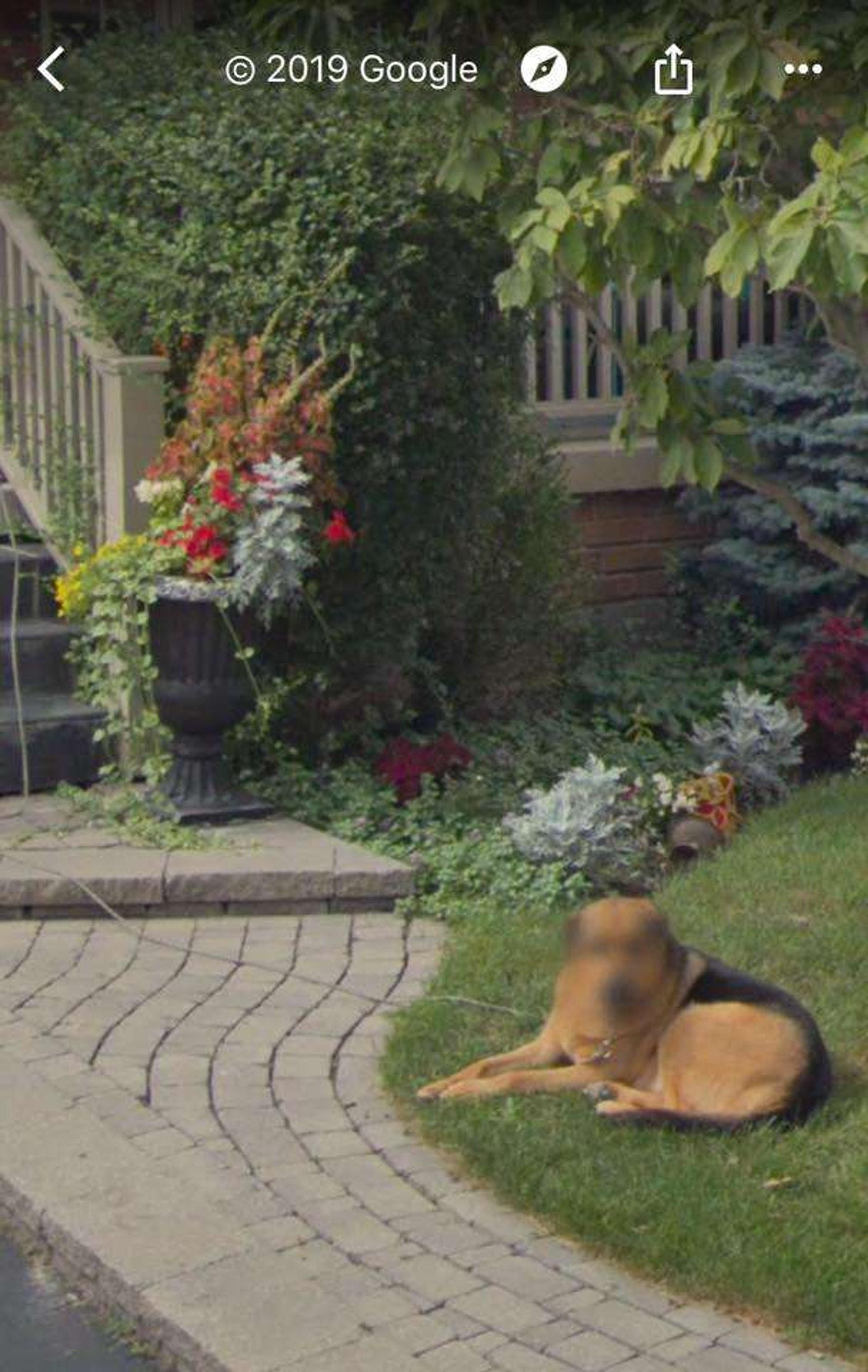 在Google街景里看到自己家的狗狗当然感到开心,但有必要这样遮脸吗? (facebook@Madelyn Rotella)