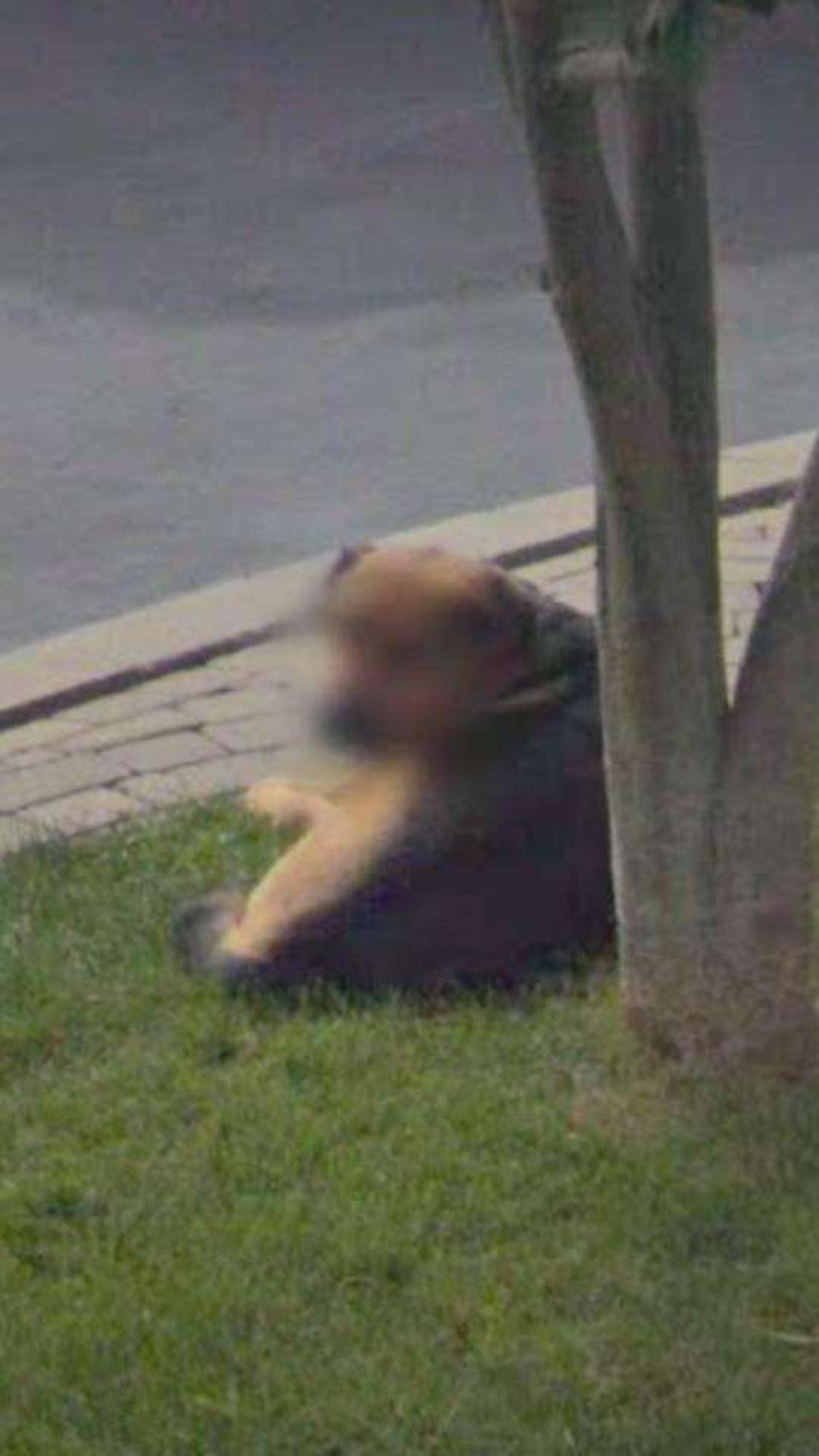 狗主就算是看到背影,应该也能辨别出这是自己的狗狗吧! (facebook@Madelyn Rotella)