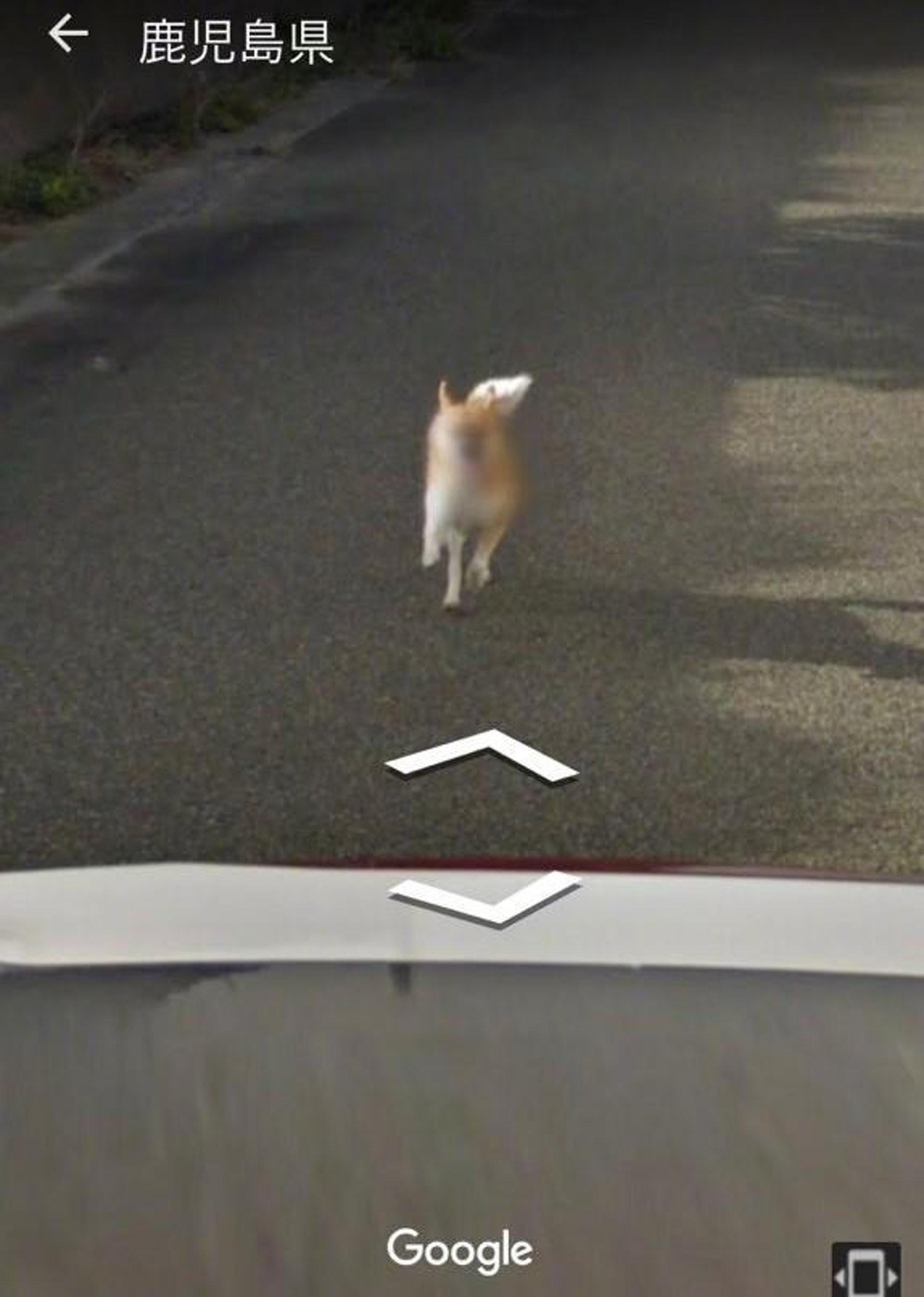 拍摄地点是鹿儿岛县,不知现在这照片是否还在。 (Google街景服务截图)