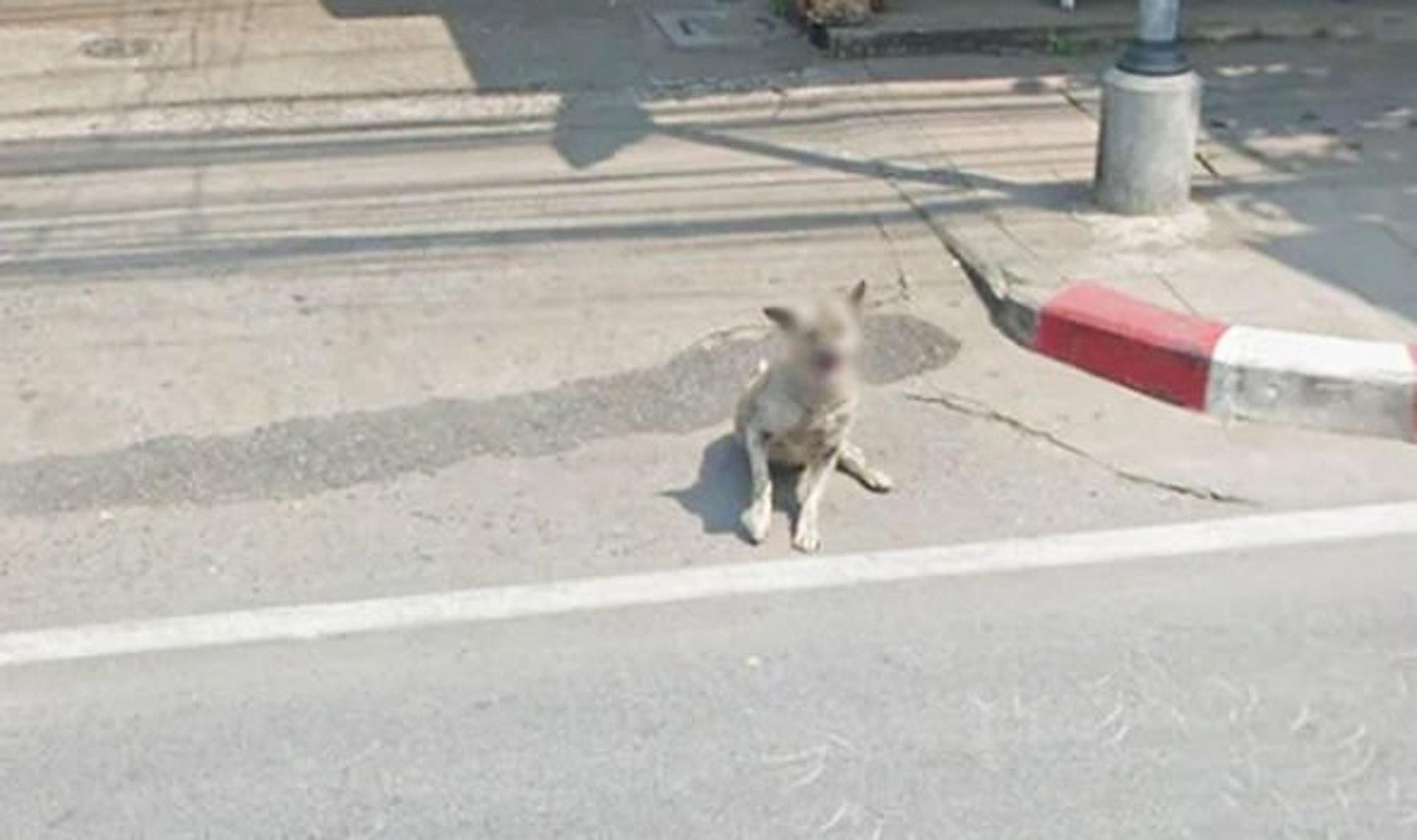另一只被Google保护身份的狗狗。 (Google街景服务截图)