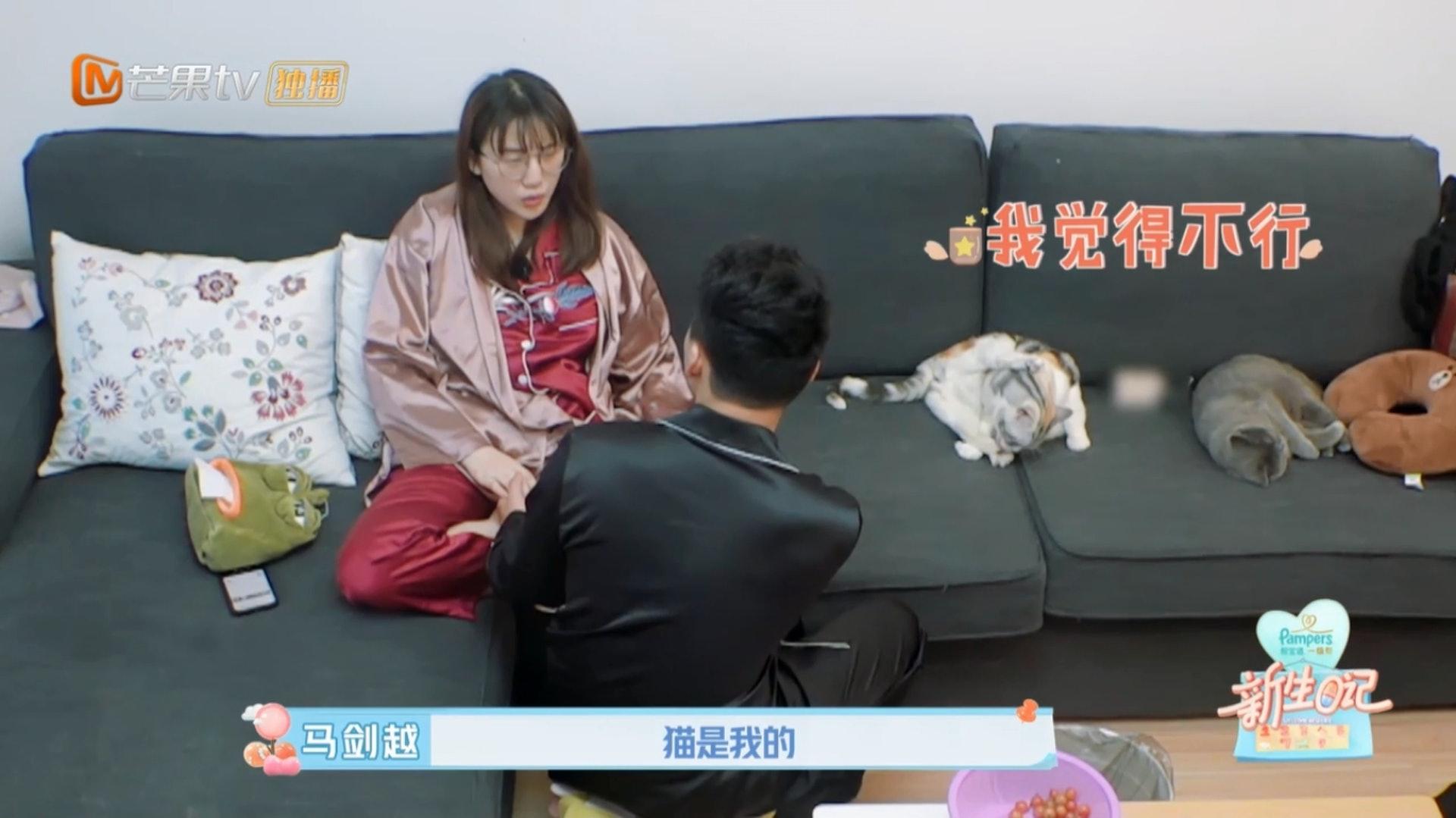 準媽媽馬劍越不捨得自己的貓狗,丈夫張杰努力勸服她。(Youtube影片截圖)