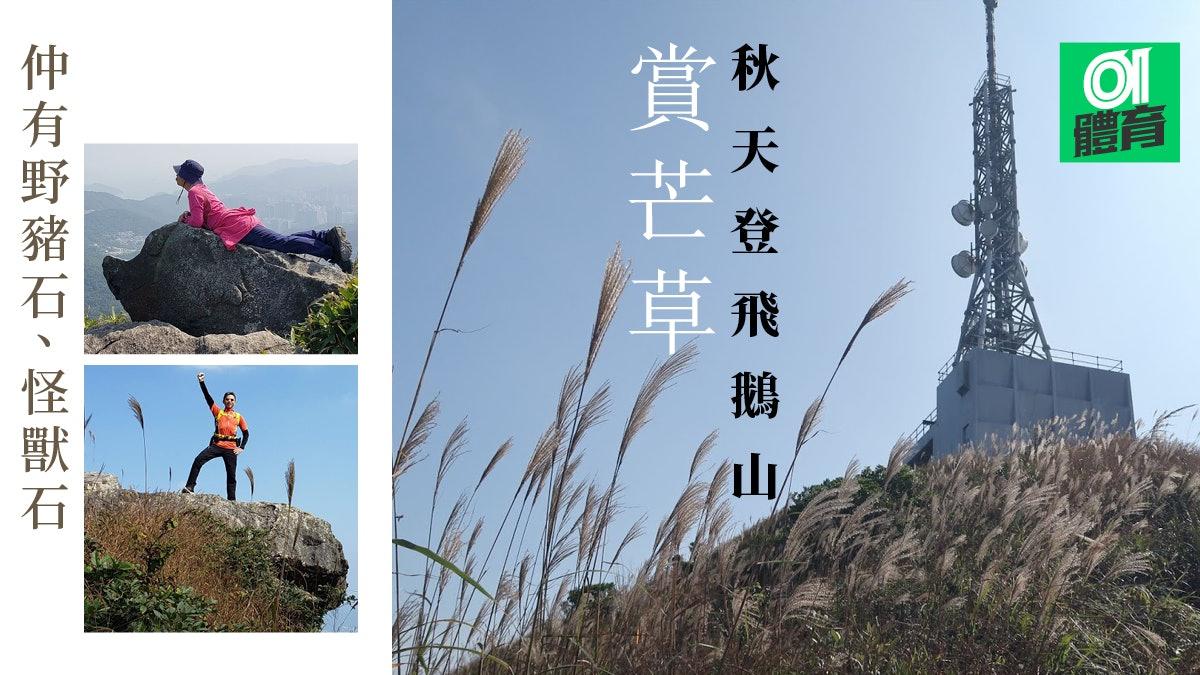 飛鵝山行山路線 登飛鵝山頂發射站經象山東山落坪石沿途尋奇石芒草打卡