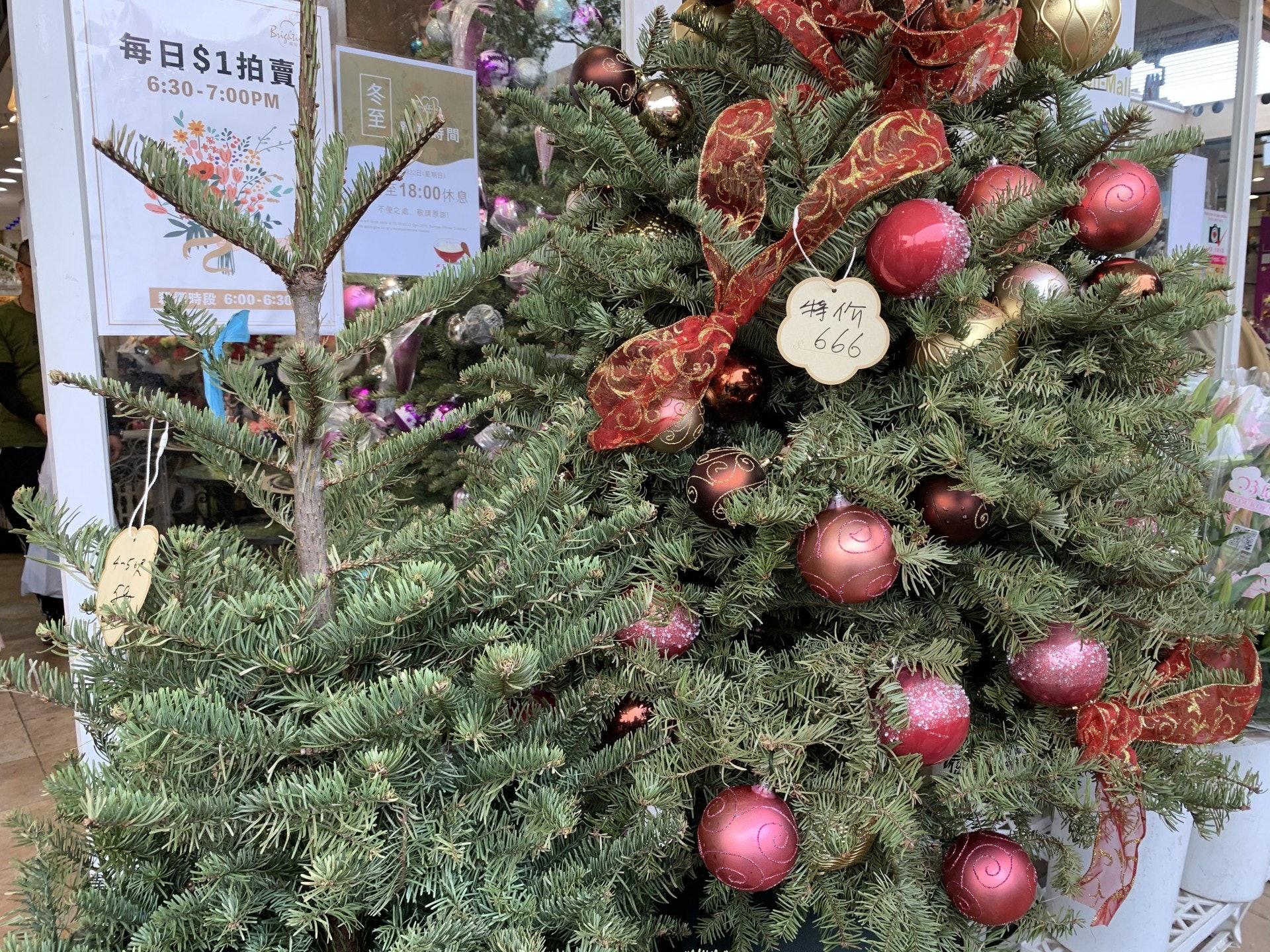 花墟有不少聖誕樹待沽。(曾凱欣攝)