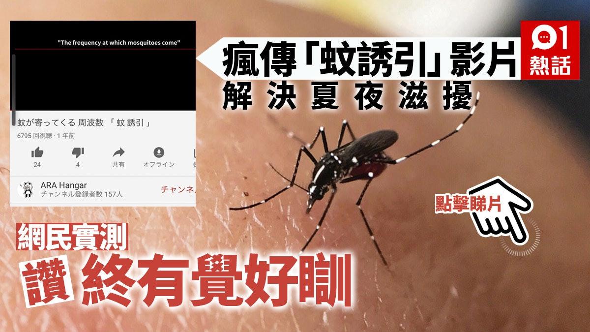耳邊嗡嗡叫好煩! 網民實測「滅蚊大法」讚有用 專家指出一盲點