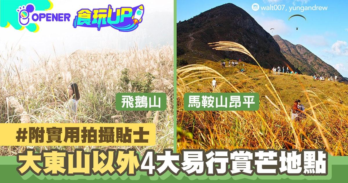 周末必去 大東山見芒草海 必推4個易行賞芒草熱點 附拍攝貼士 香港01 開罐