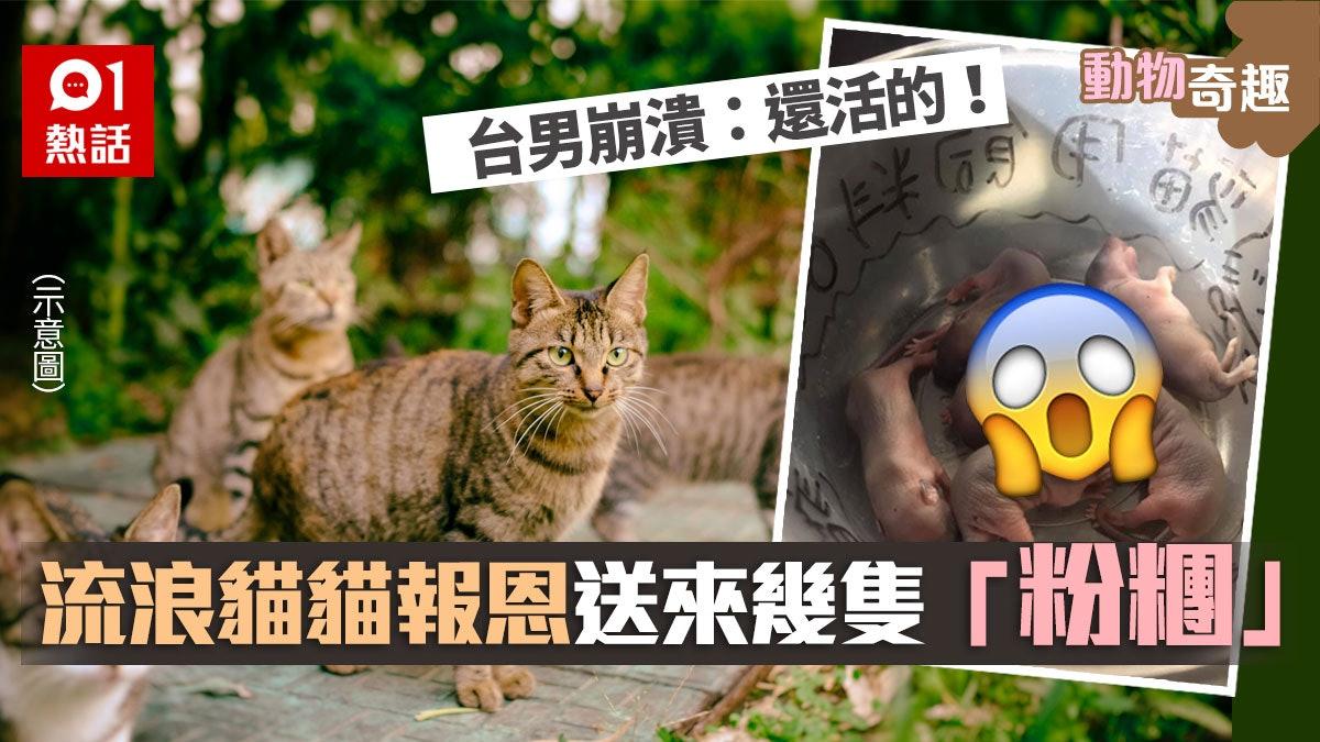 【貓之報恩】家門外放飼料餵流浪貓 台男收到一碗「回禮」超崩潰