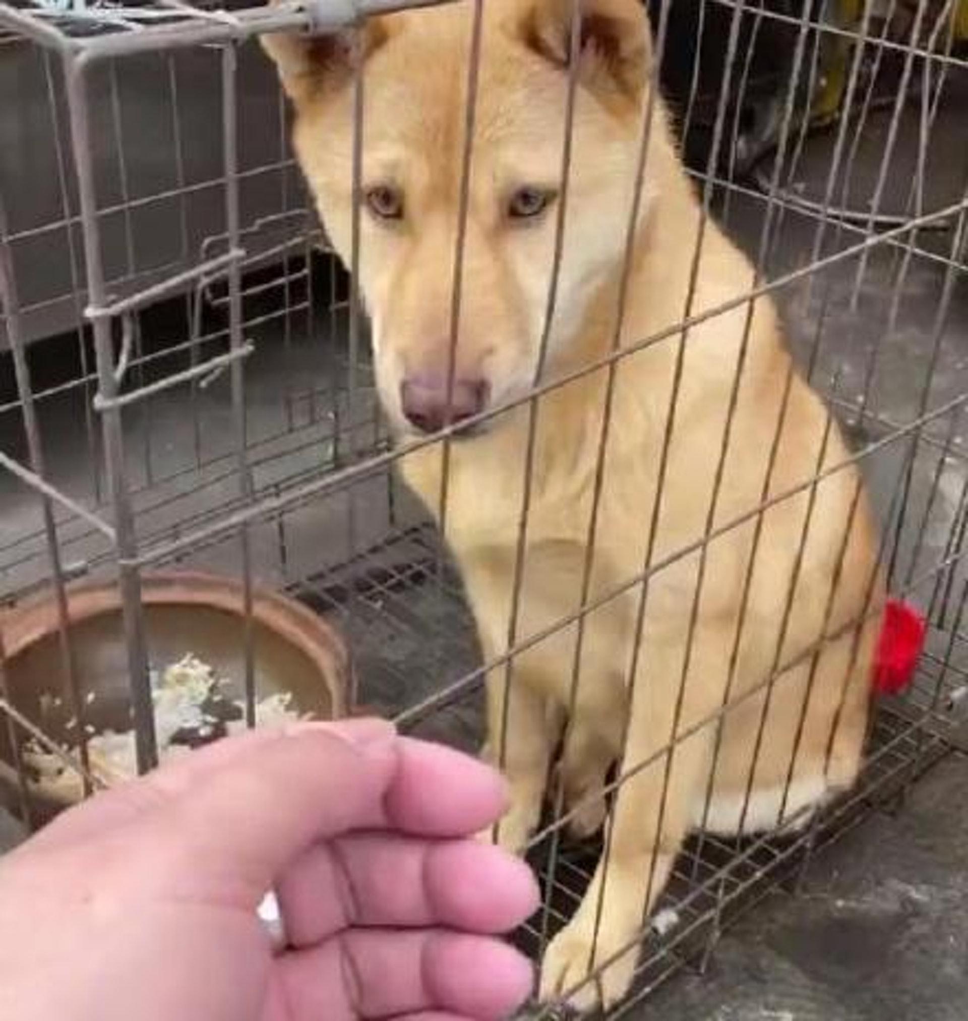 狗狗這麼可愛,為何有人會食牠們。(微博)
