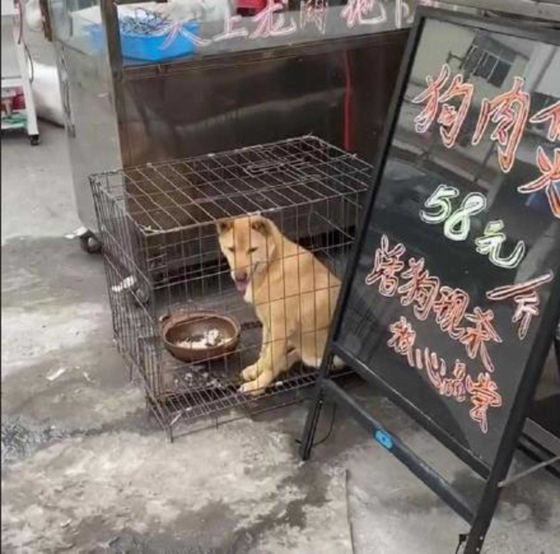 廣西玉林當地,不少食肆都放出狗隻作招徠,寫着現殺!(微博)
