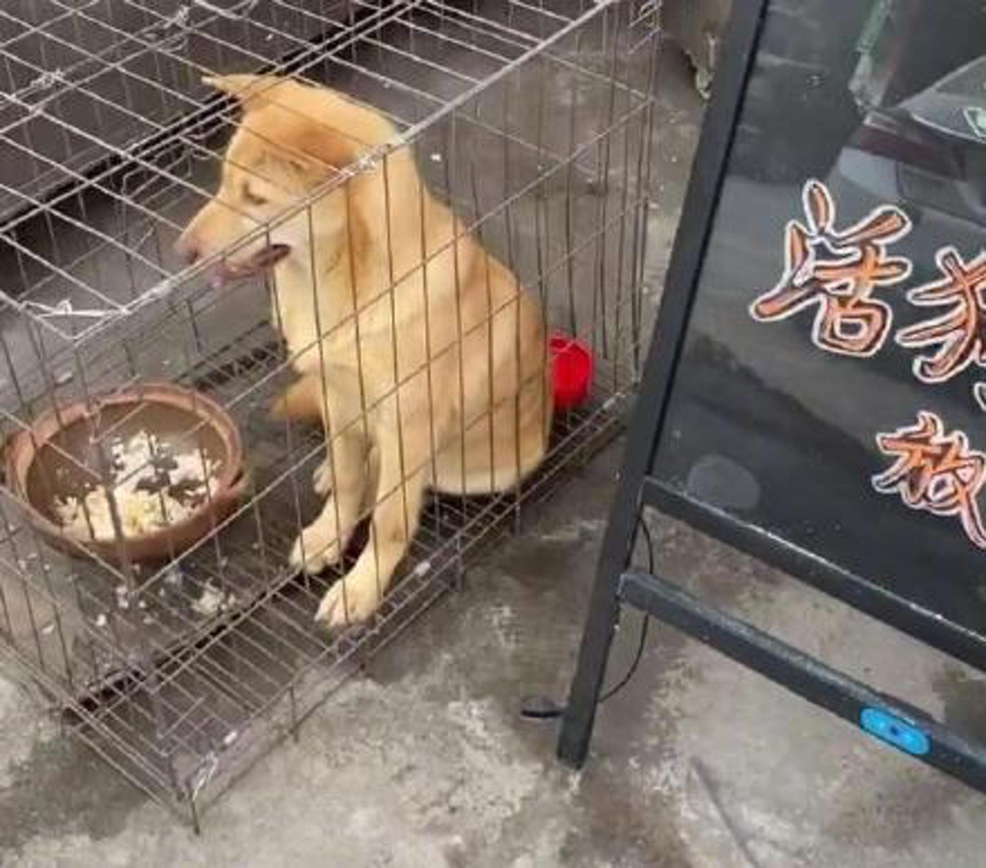 沒法想象每年有多少狗隻被人這樣吃掉了。(微博)