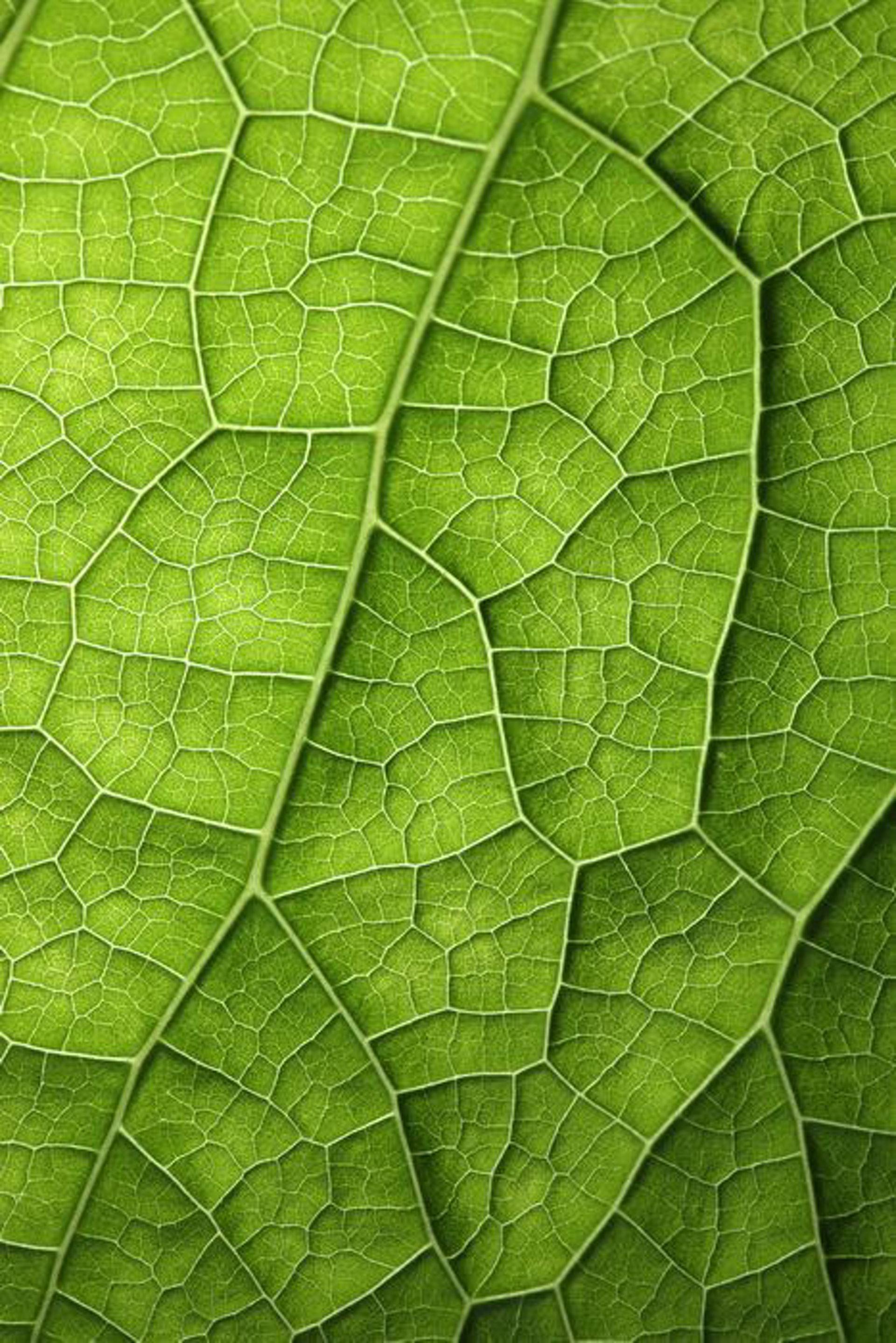 地球上的動植物和自然環境中,都有大量Voronoi Diagram的例子。(網上圖片)