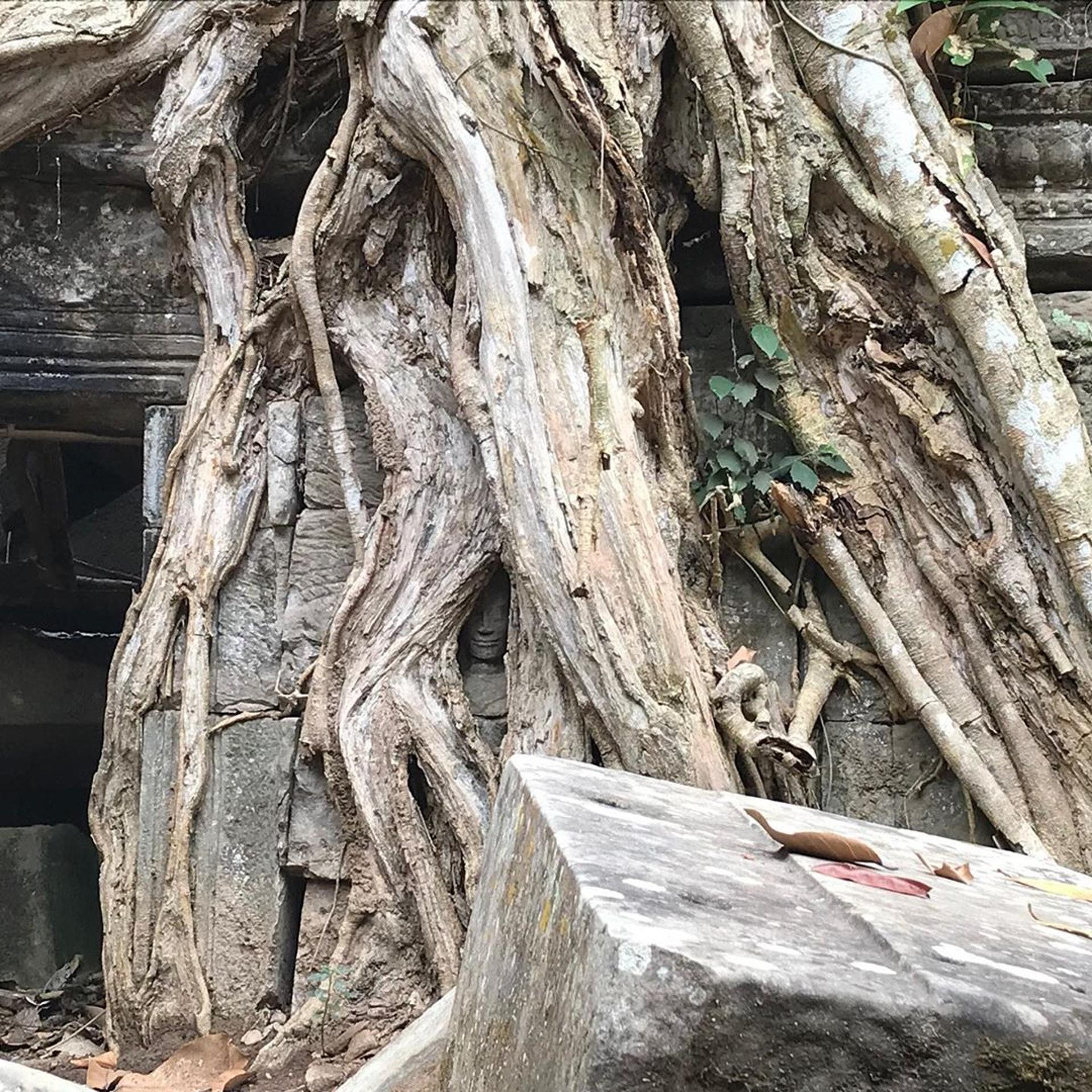 柬埔寨─塔普倫寺(Ig@listentripstory)