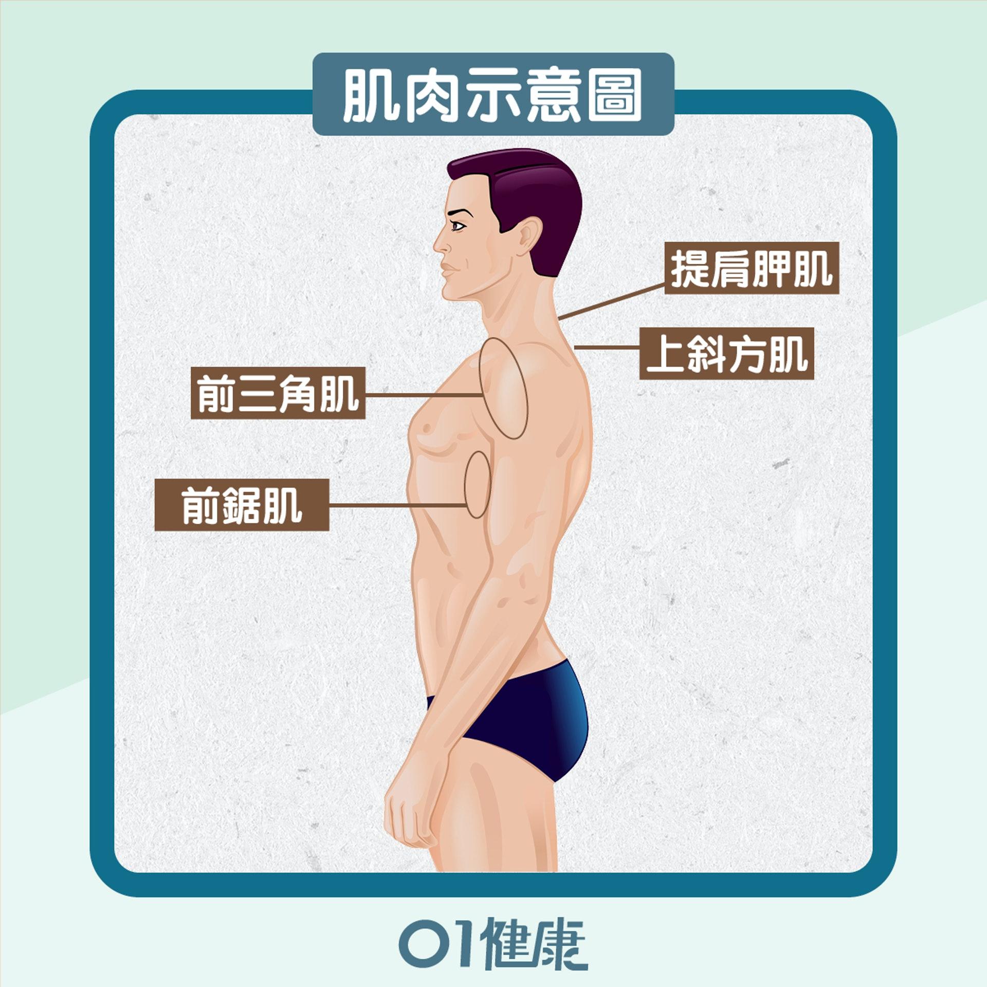 「寒背」的姿勢令胸大肌、背闊肌和肩膀的前三角肌慣性縮短,及後導致肩關節出現內旋,即「圓肩」