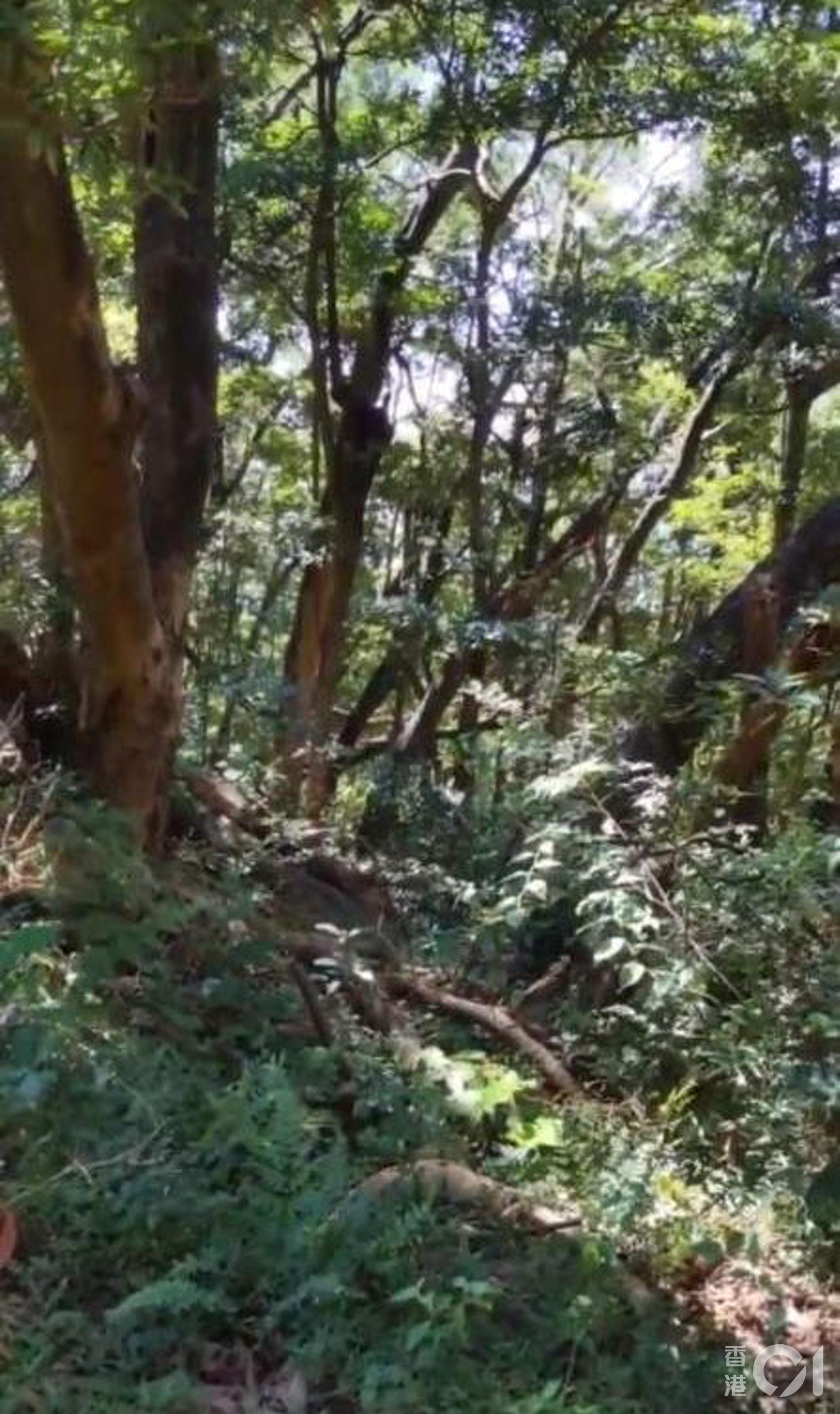 沿途被大樹包圍,只聽在風吹下發出的沙沙聲,令我想起一個人走在濟州的樹林之中,有一點點害怕,卻又特別寫意。(李琬瑩攝)