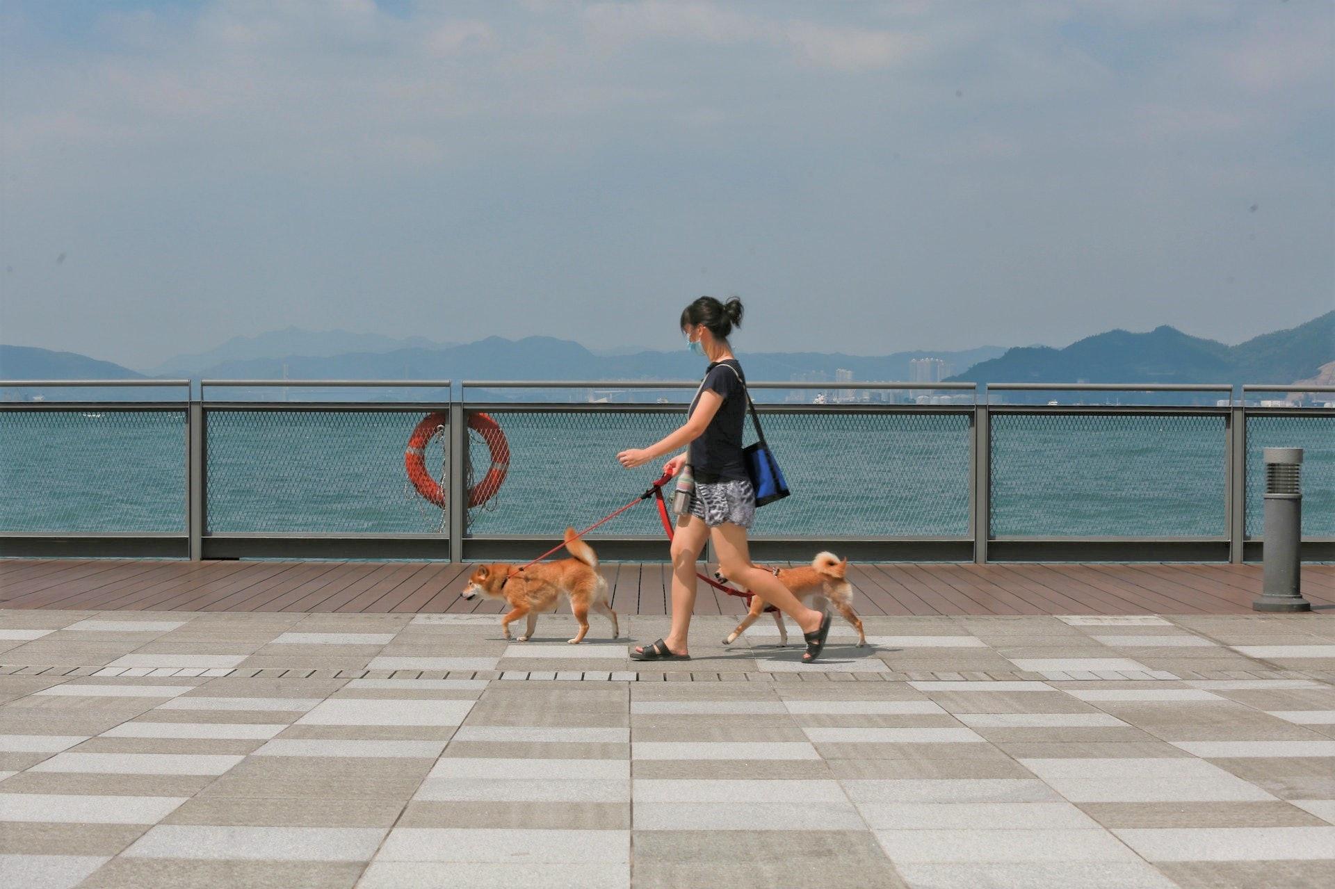 休憩用地設有寵物角,市民可以帶埋有牽繩的寵物前去散步。(資料圖片)