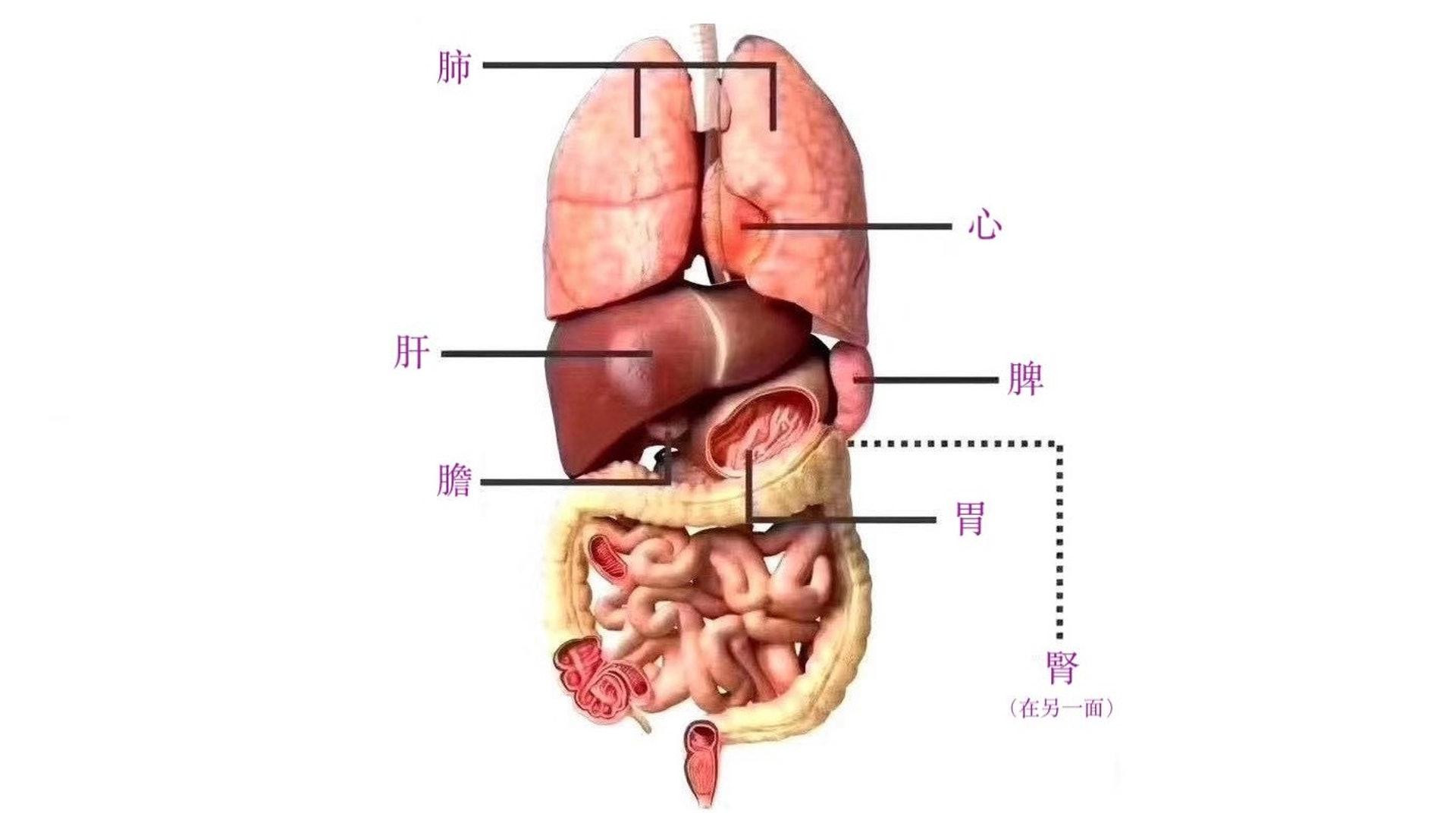 肝、脾、腎三個部位功能改善,精血充足下卵子的質量就會高,自能受孕。(圖片:sohu)