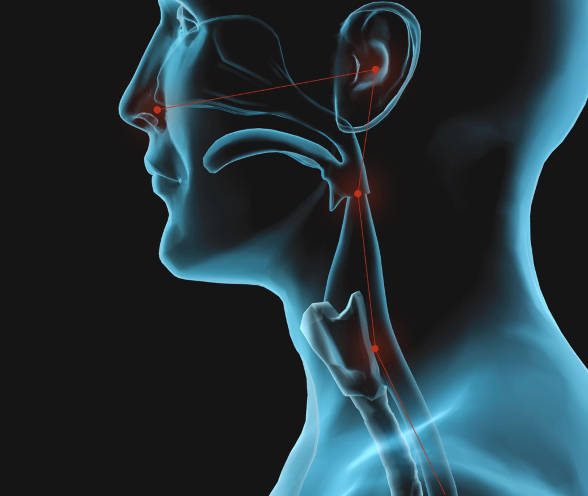 OAS症狀屬「局部性」,通常只出現在口腔。而耳、鼻、喉的結構是貫通的,致敏源有機會跑到耳朵,可能令耳朵也跟住痕癢。 (圖片:enthealth)