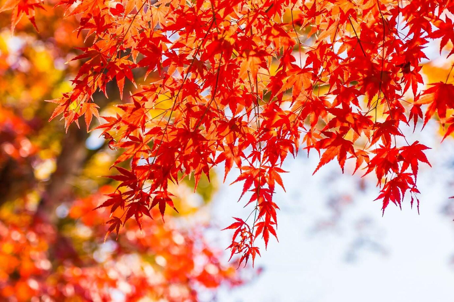 廿四節氣的「秋分」是秋天的中間點。踏入秋分後,「涼冷」和「乾燥」這兩大秋季特性變得更明顯。(圖片:iqhealth)